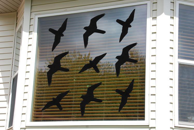 hawk-silouette-on-window-many.jpg