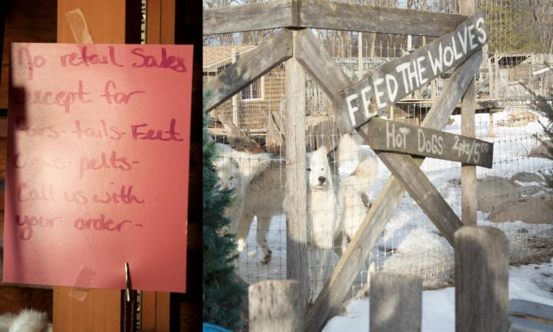 "This is Fur Ever Wild. The first sign reads ""No retail sales except for furs, tails, feet, claws, pelts. Call us with your order."" (right) Wolves in a pen at Fur-Ever Wild. The sign says ""Feed the wolves hot dogs 2pks/$5.00"""