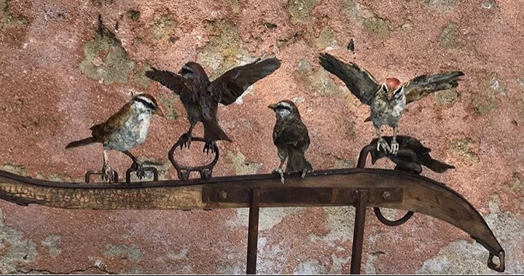 sparrows final.jpg