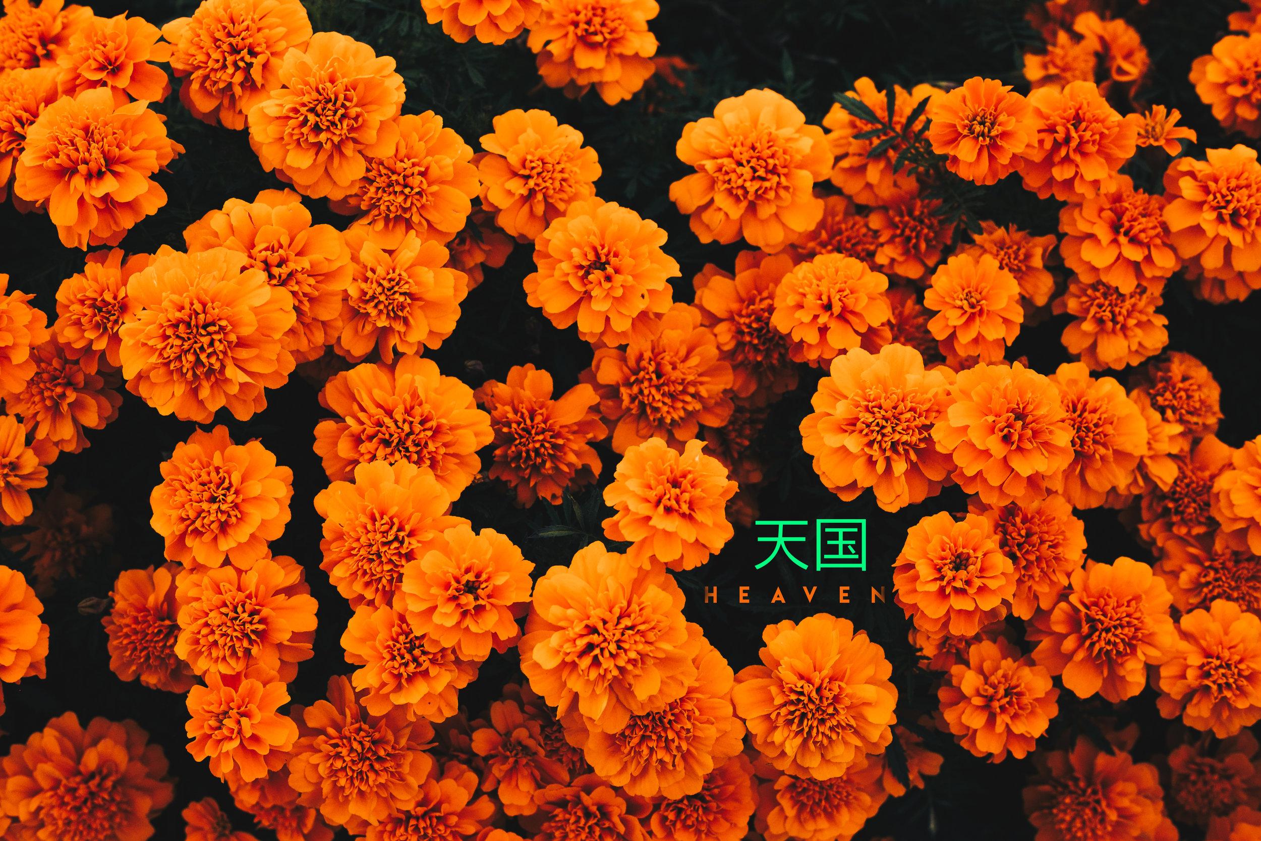 CynLagos-Japan-Teaser-Hakone-Oct-2018 (18 of 34)-heaven.jpg