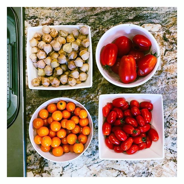 """""""If you look the right way, you can see that the whole world is a garden"""" - Frances Hodgson Burnett I love our garden harvest.. some years better than others! Such perfect abundance from nature!  #garden #summerveggies #yummy #superfresh"""