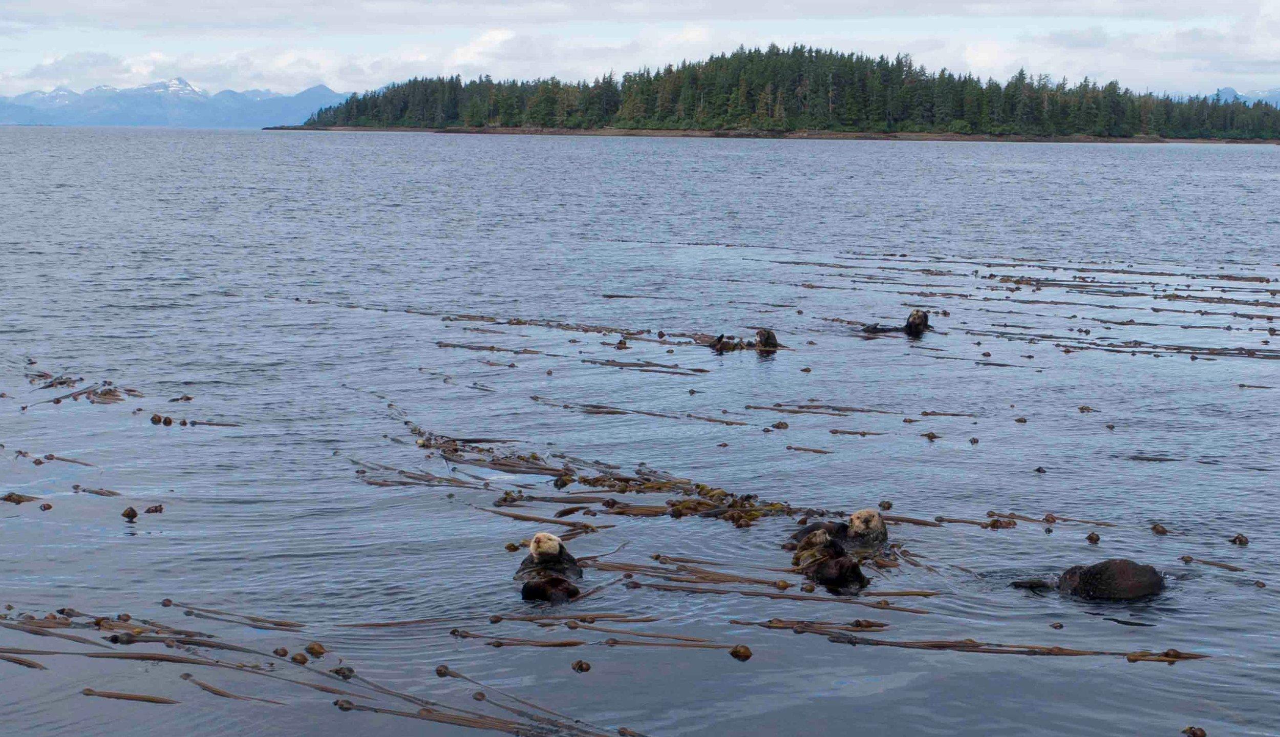 1b. crop sea otter nursery .jpg