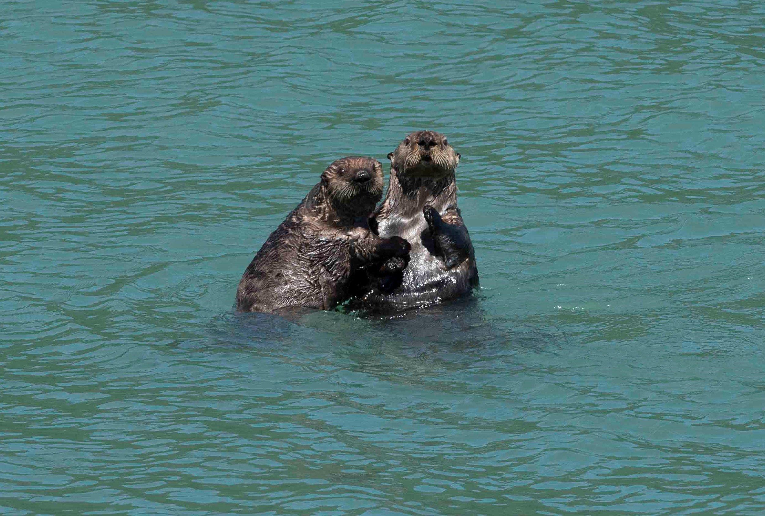 2. redo sea otters.jpg