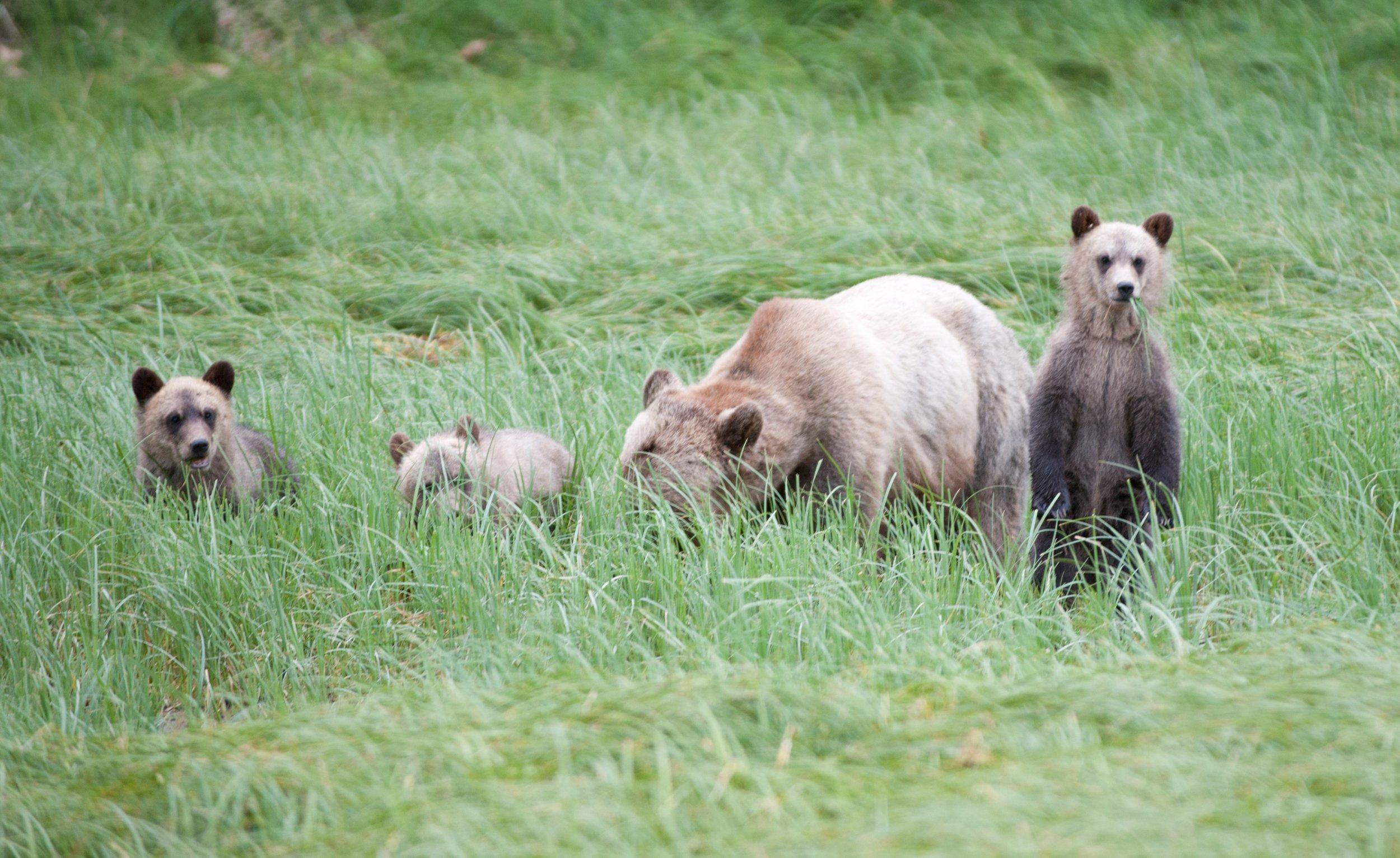 3. cropped brown bears.jpg