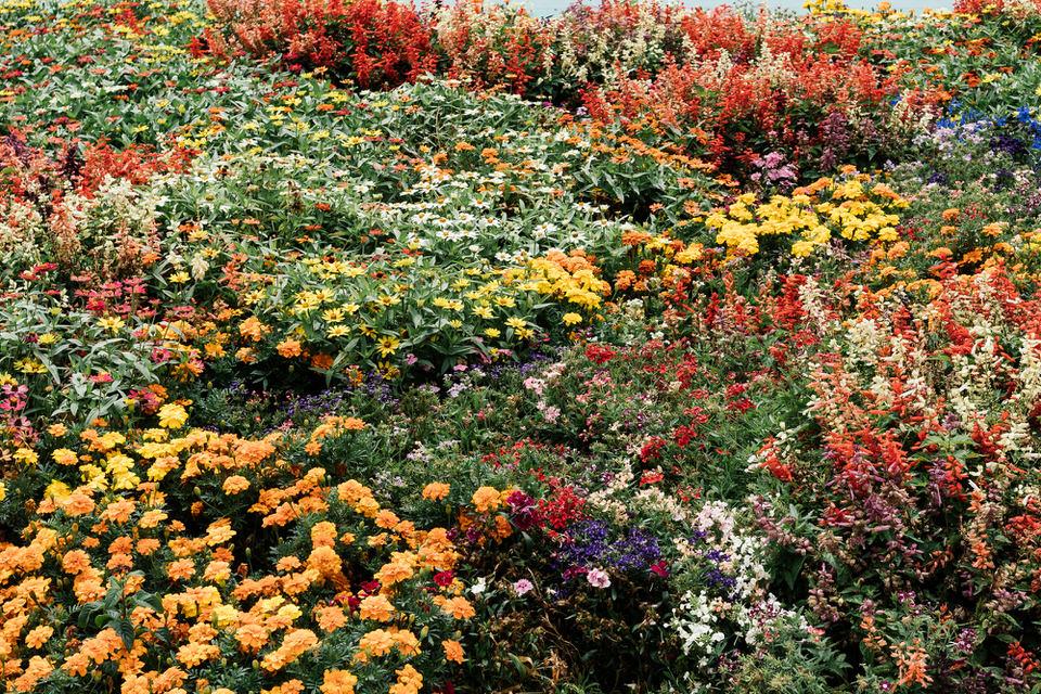 Florals at the Hamilton Gardens NZ