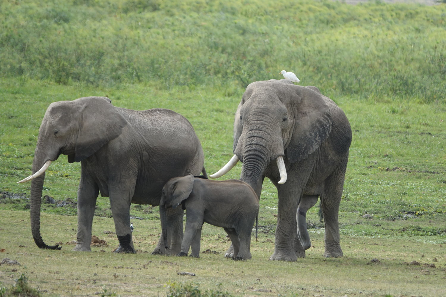 Elephant Family in Amboseli