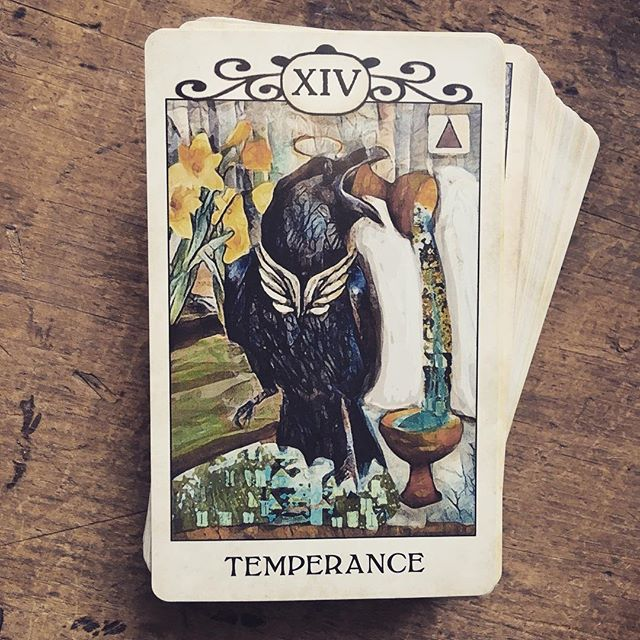 And sometimes the cards are like an old mother hen (crow?), saying: don't drink too much when you go out tonight, Dearie. 😂 #everythinginmoderation . . . #tarottribe  #tarot #dailytarot #tarotreadersofinstagram #taroteverydamnday #divination #oracle #fortuneteller #cartomancy #tarotcards #crowtarot  #oraclecards #pagan #pagans #pagansofinstagram #witch #witchesofinstagram #witches