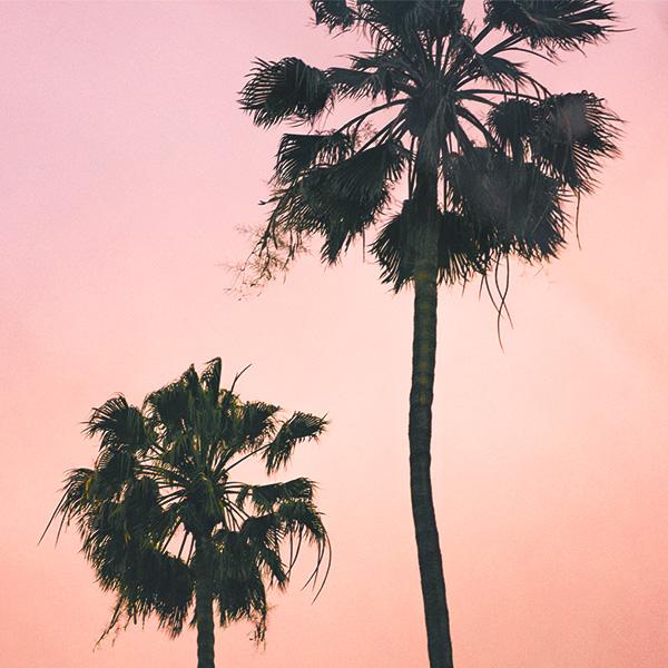 Los-Angeles-Influencers-Palm-Tree-Pink-1.jpg