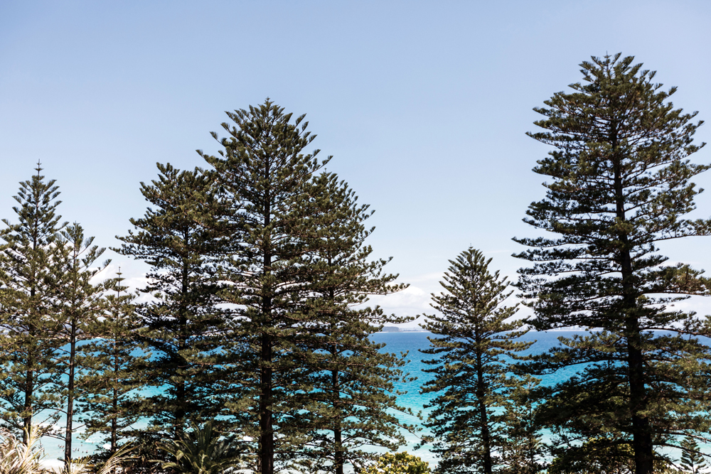 Greenmount-Norfolk-Pines-View-LR.jpg