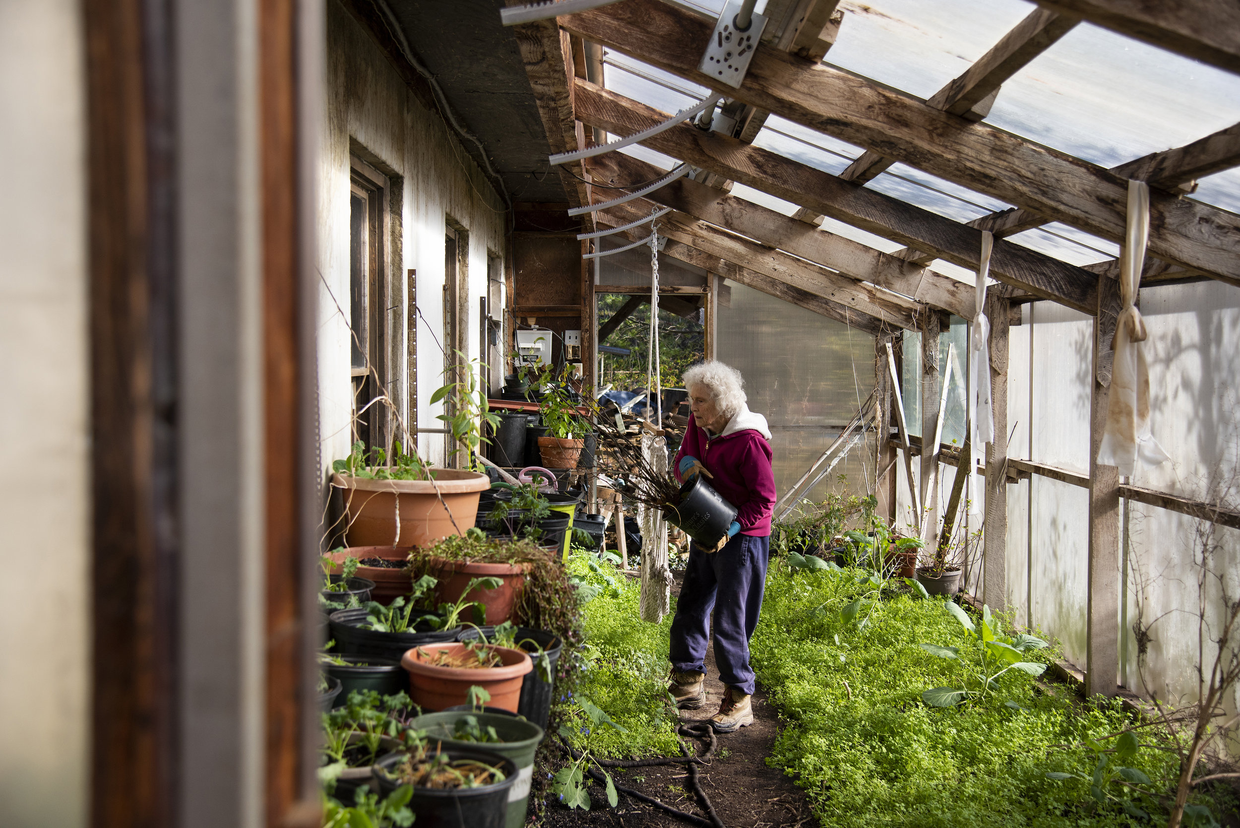 Jean Forsberg moves plants from her outside deck to her personal greenhouse for the winter. Forsberg grows many vegetables, like kale, that she and her husband eat throughout the year. She uses a greenhouse attached to her home opposed to the community greenhouses.