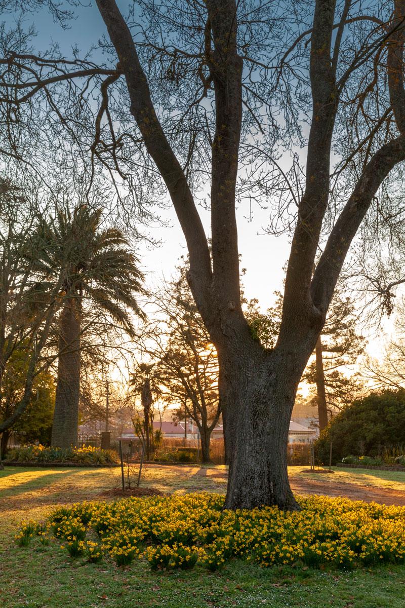 Kyneton-Botanic-Gardens--Spring-9.jpg