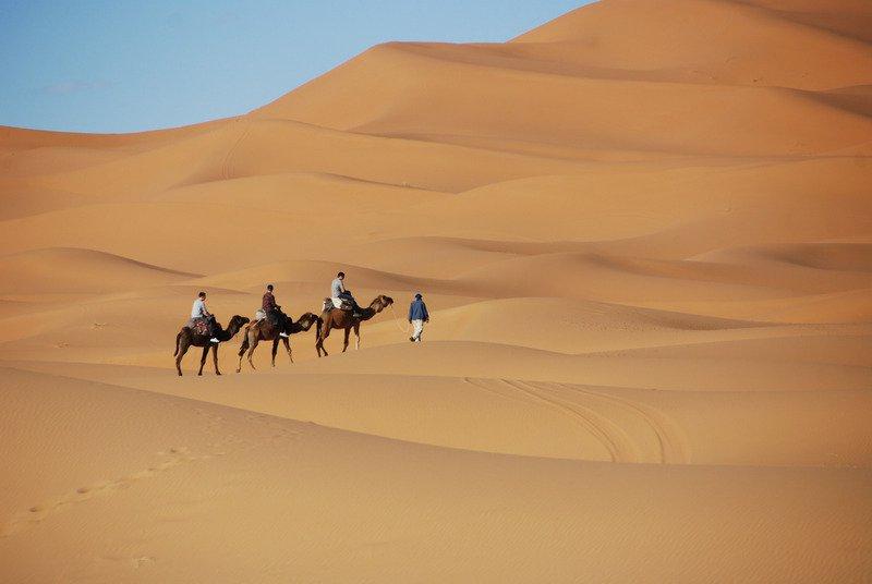 morocco desert camels.jpg