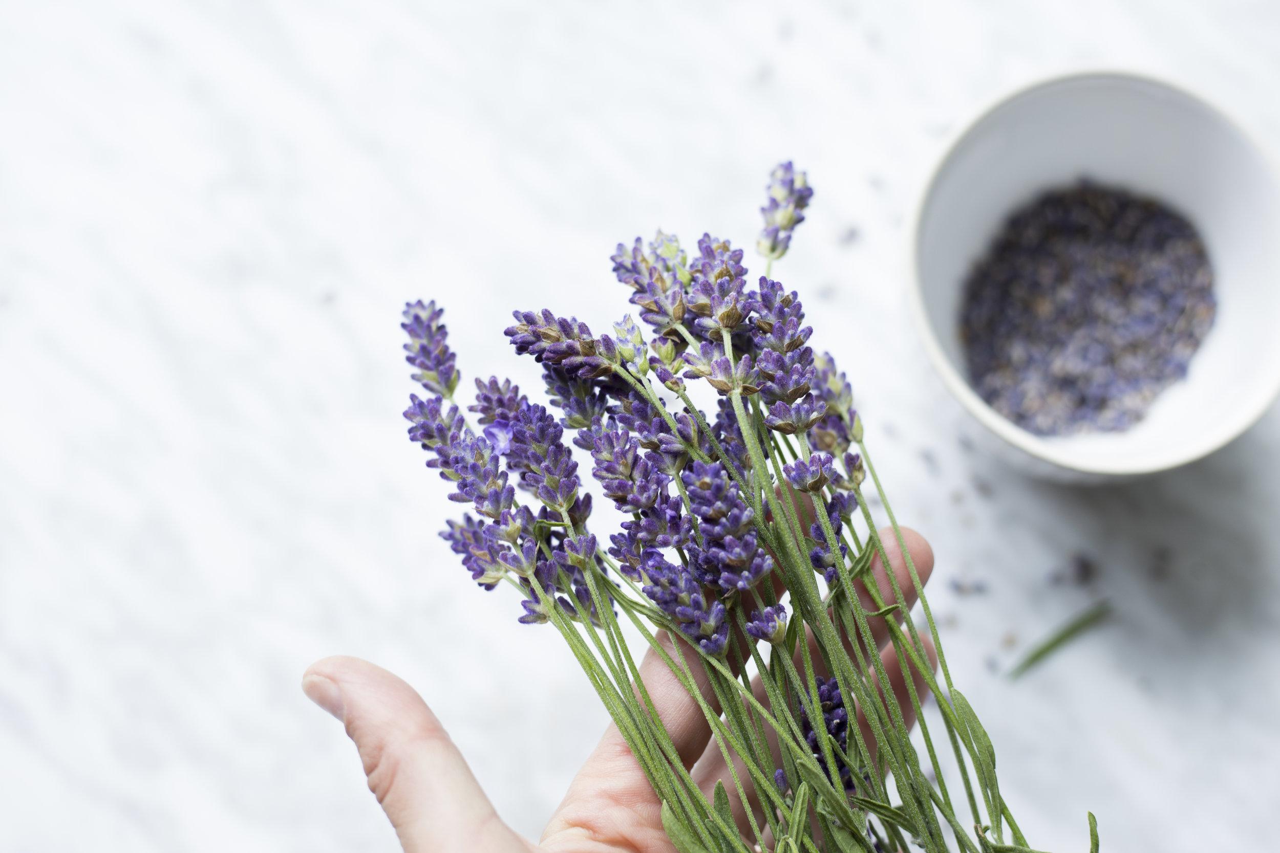 hand holding lavender flowers.jpg