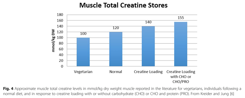 muscle total creatine stores.png