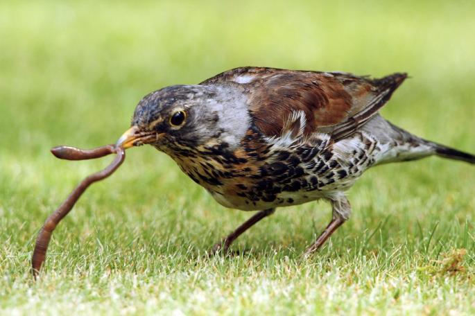 bird got the worm.jpg