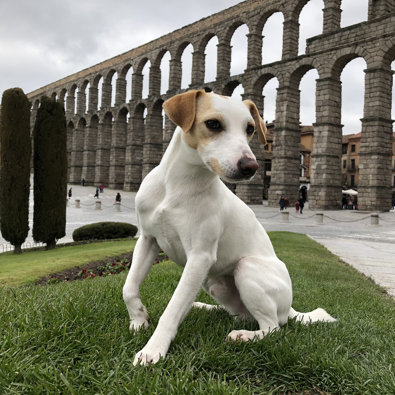 El acueducto romano.