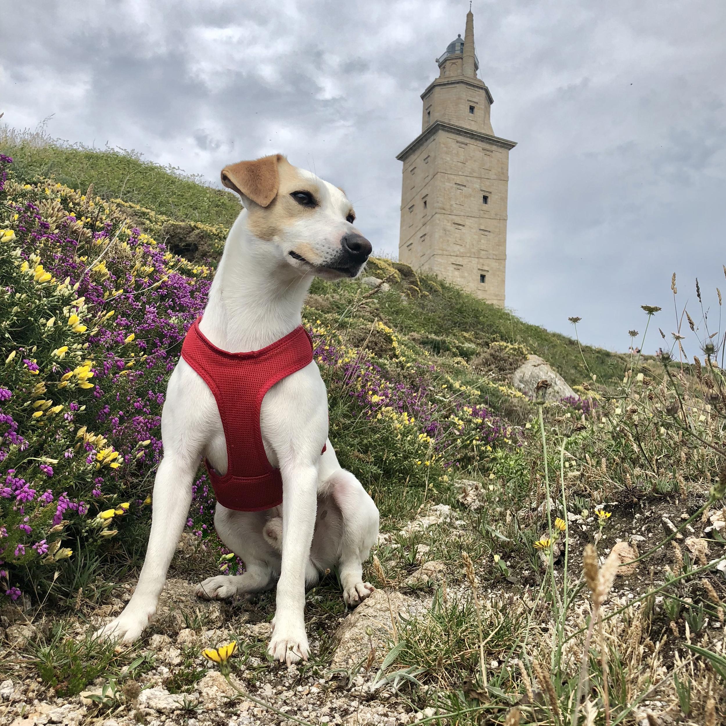 Buscando a Hércules en A Coruña.