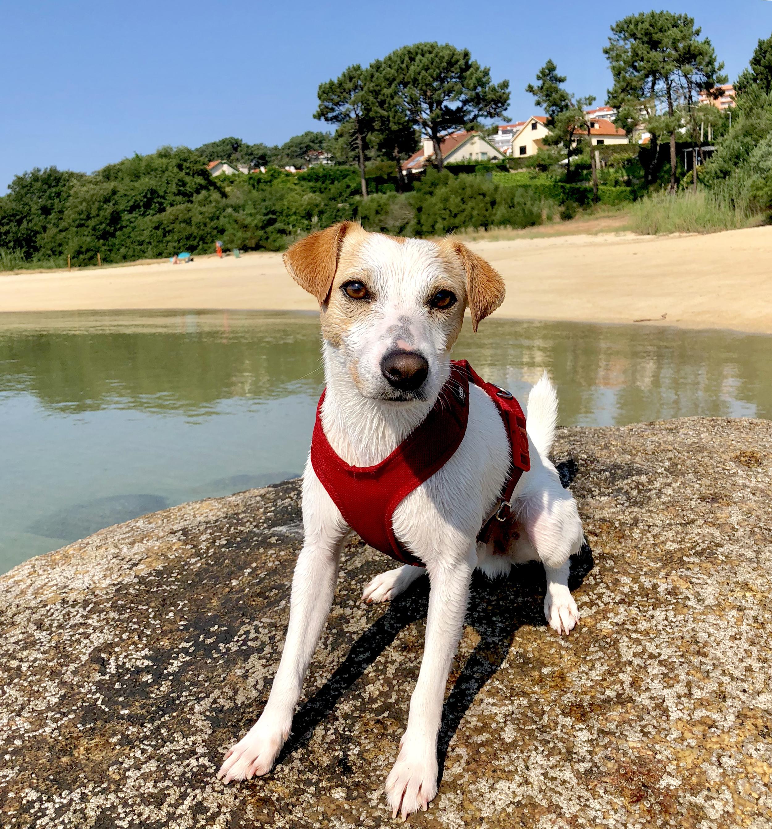 Pipper en la playa de O Espiño, junto al puerto Deportivo de Pedras Negras, en O Grove.