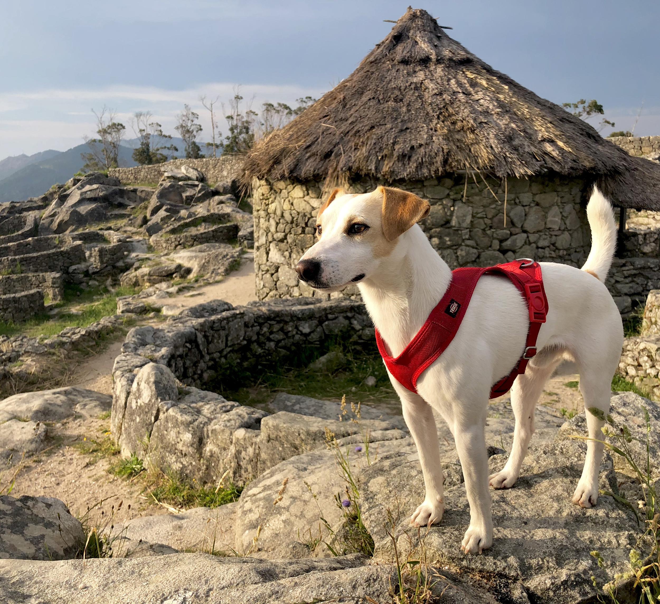 Pipper en el castro de Santa Tecla.