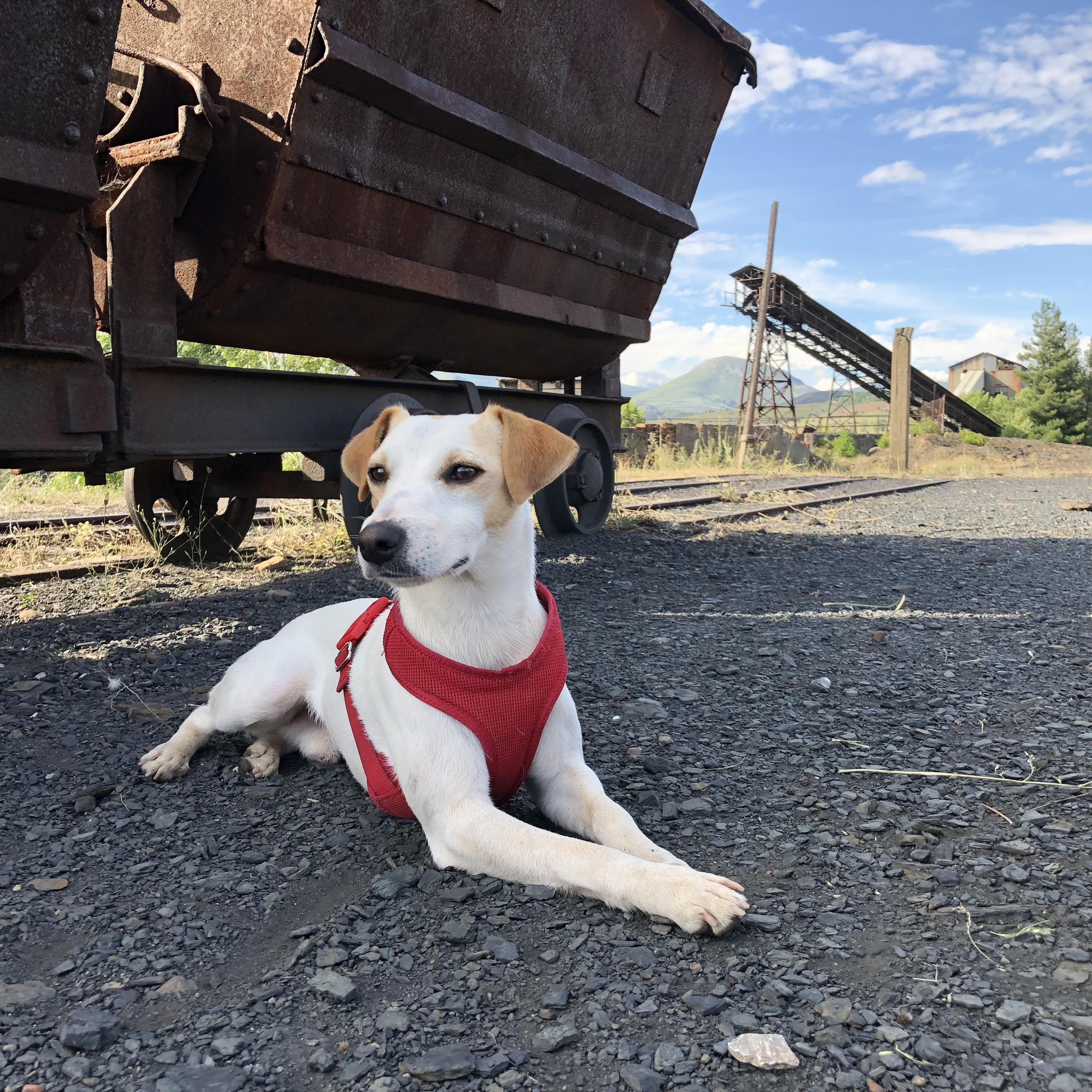 Visitas guiadas dog friendly en la mina Pozo Julia (en Fabero).