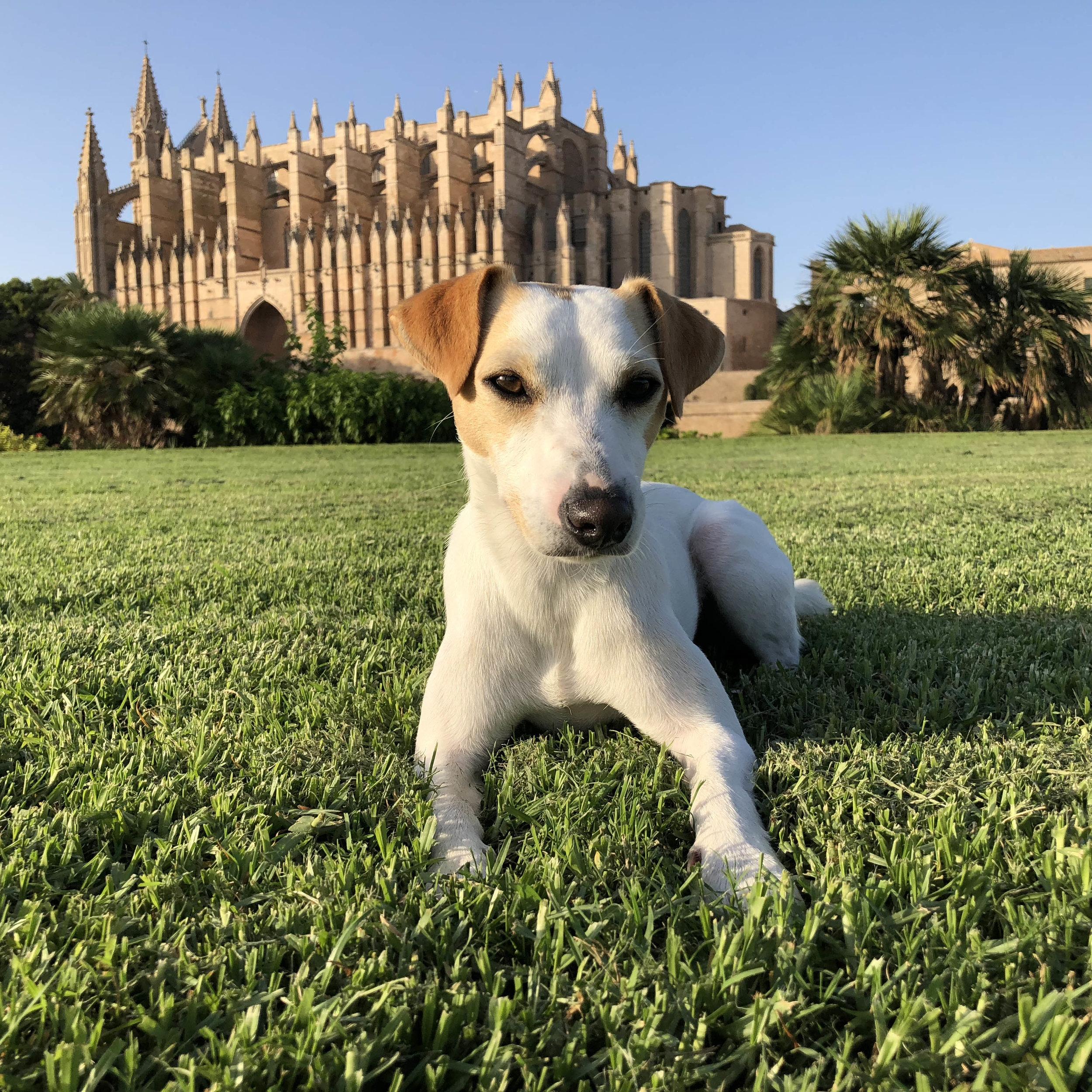 Frente a la catedral de Palma.