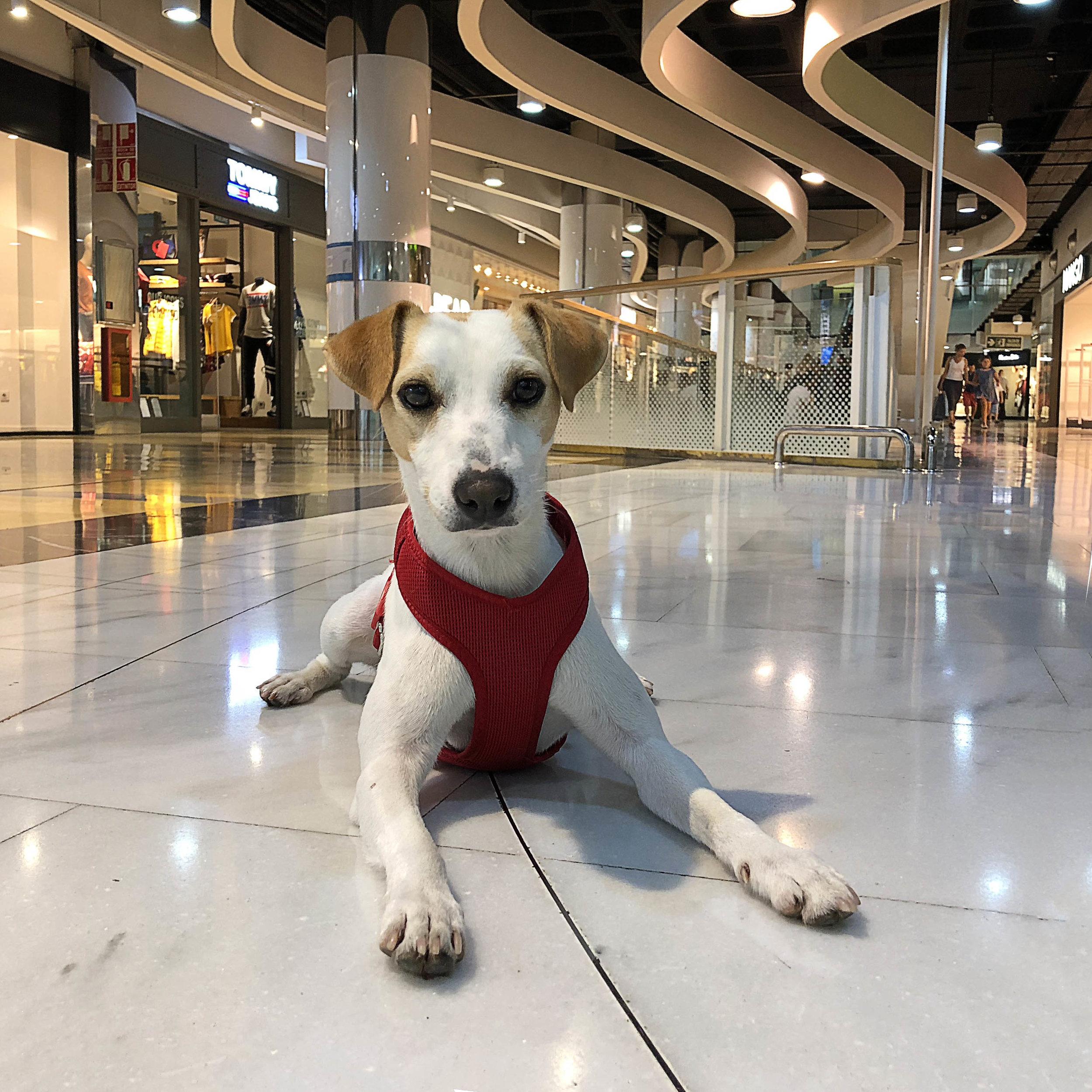 En el centro comercial Porto Pi.