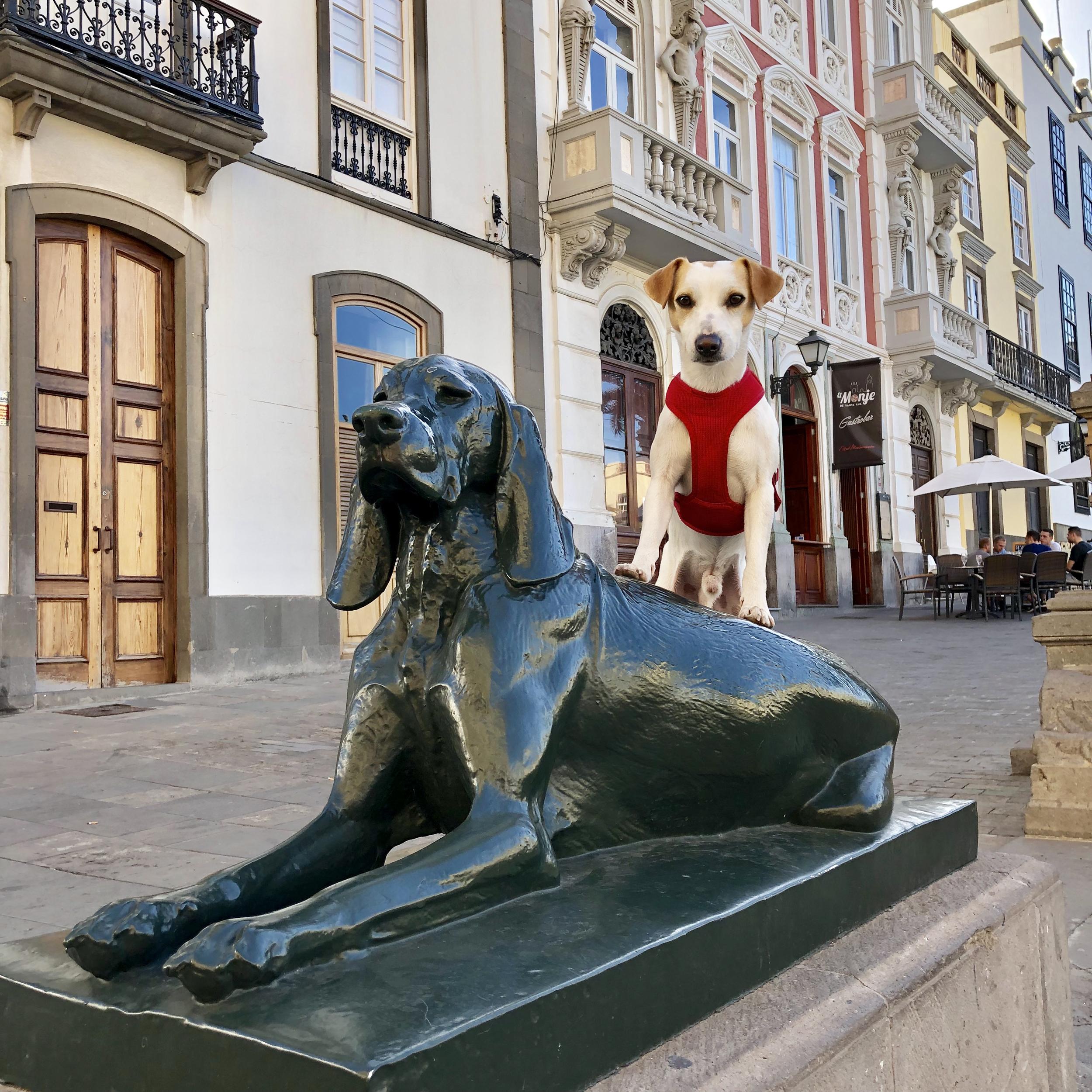 """El nombre de Canarias podría derivar de """"canes""""."""