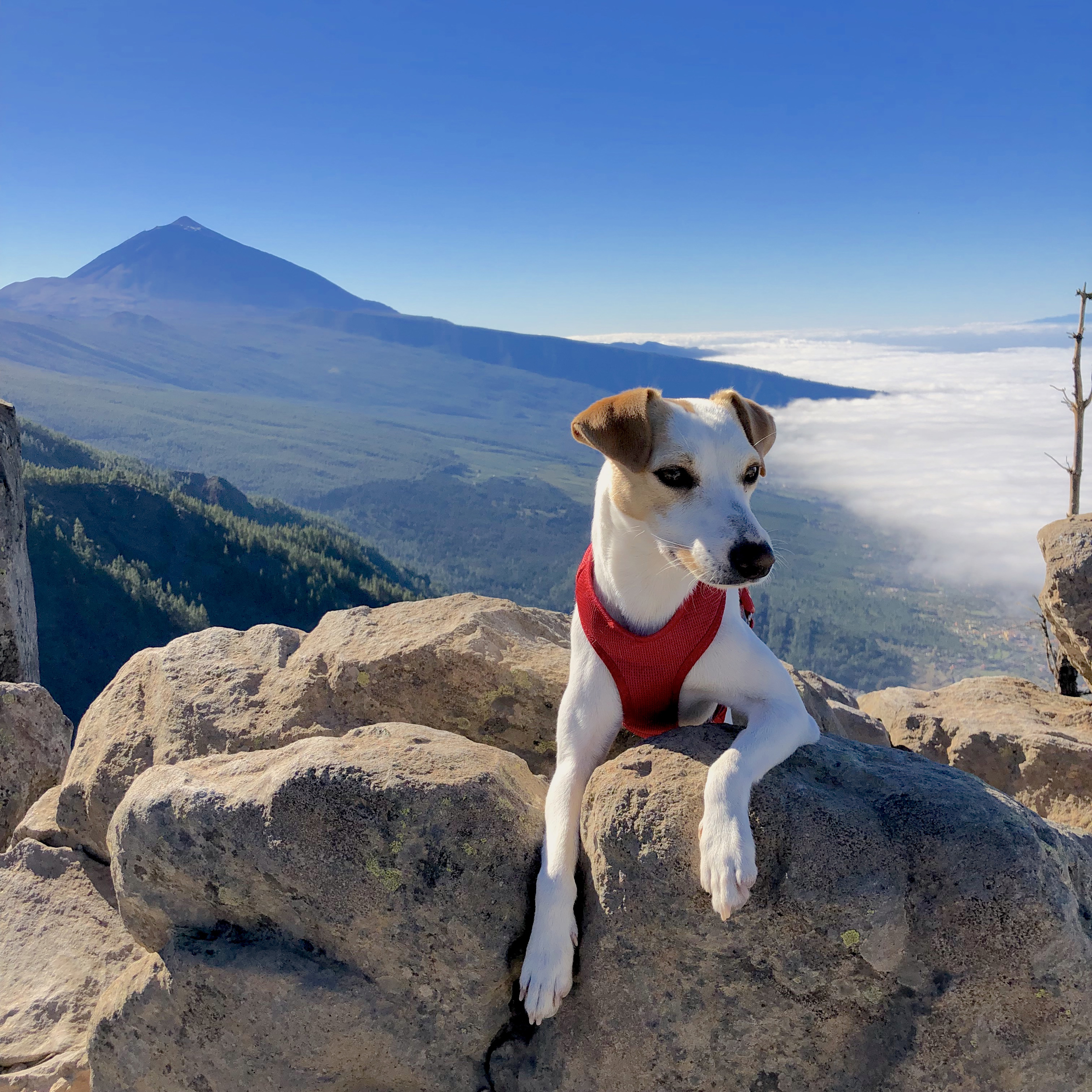 Mar de nubes en el Teide.
