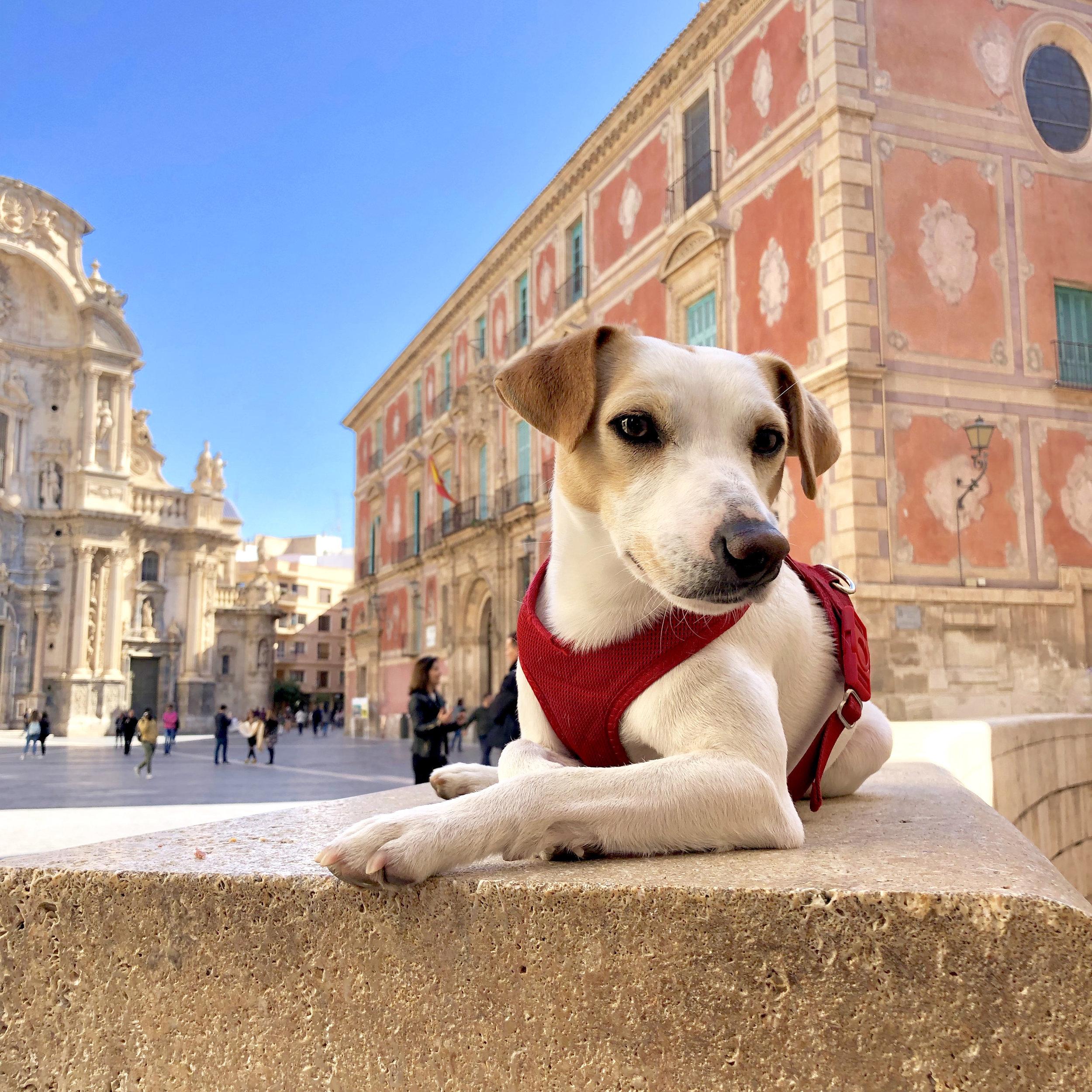 En la plaza de la catedral de Murcia.