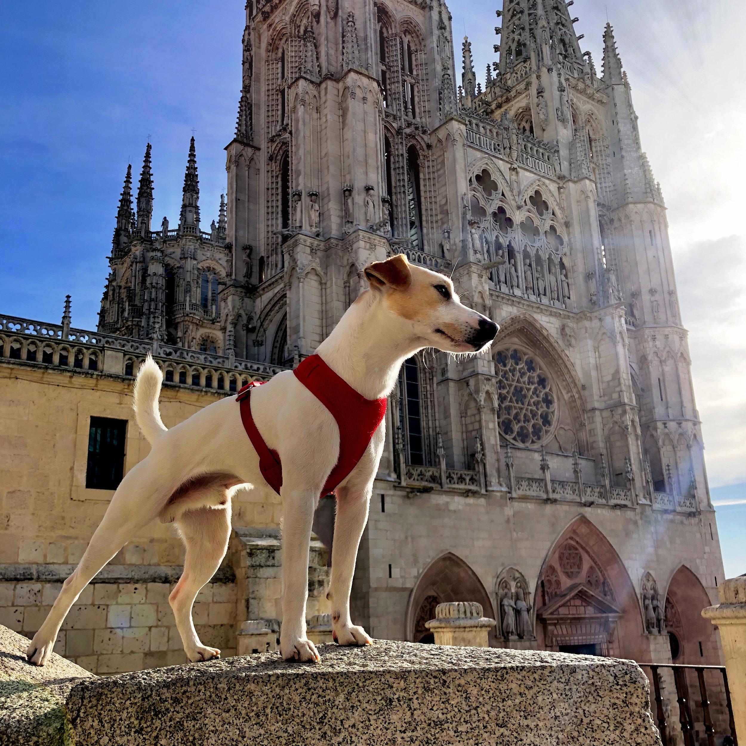 Frente a la Catedral de Burgos.