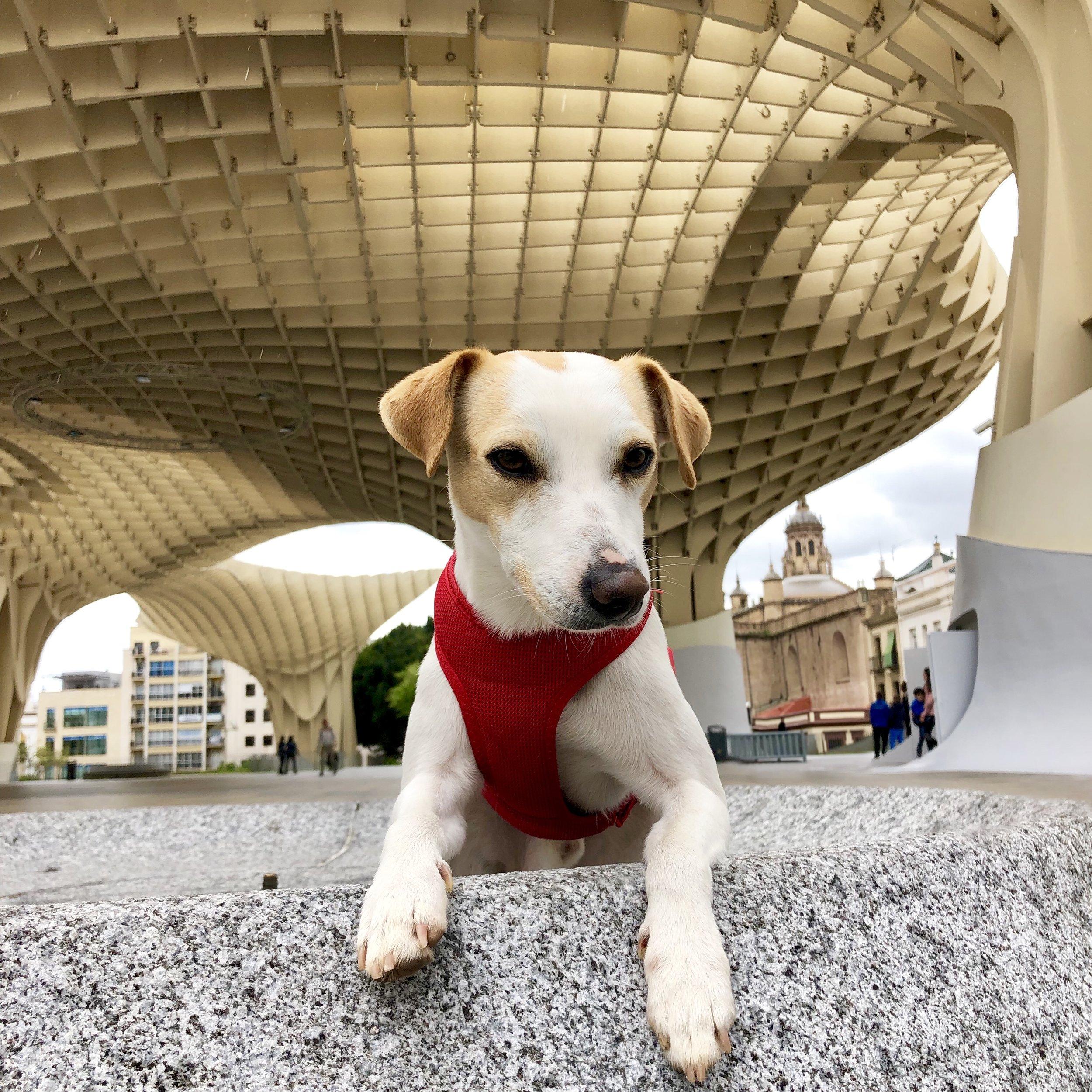Pipper en las setas de Sevilla.