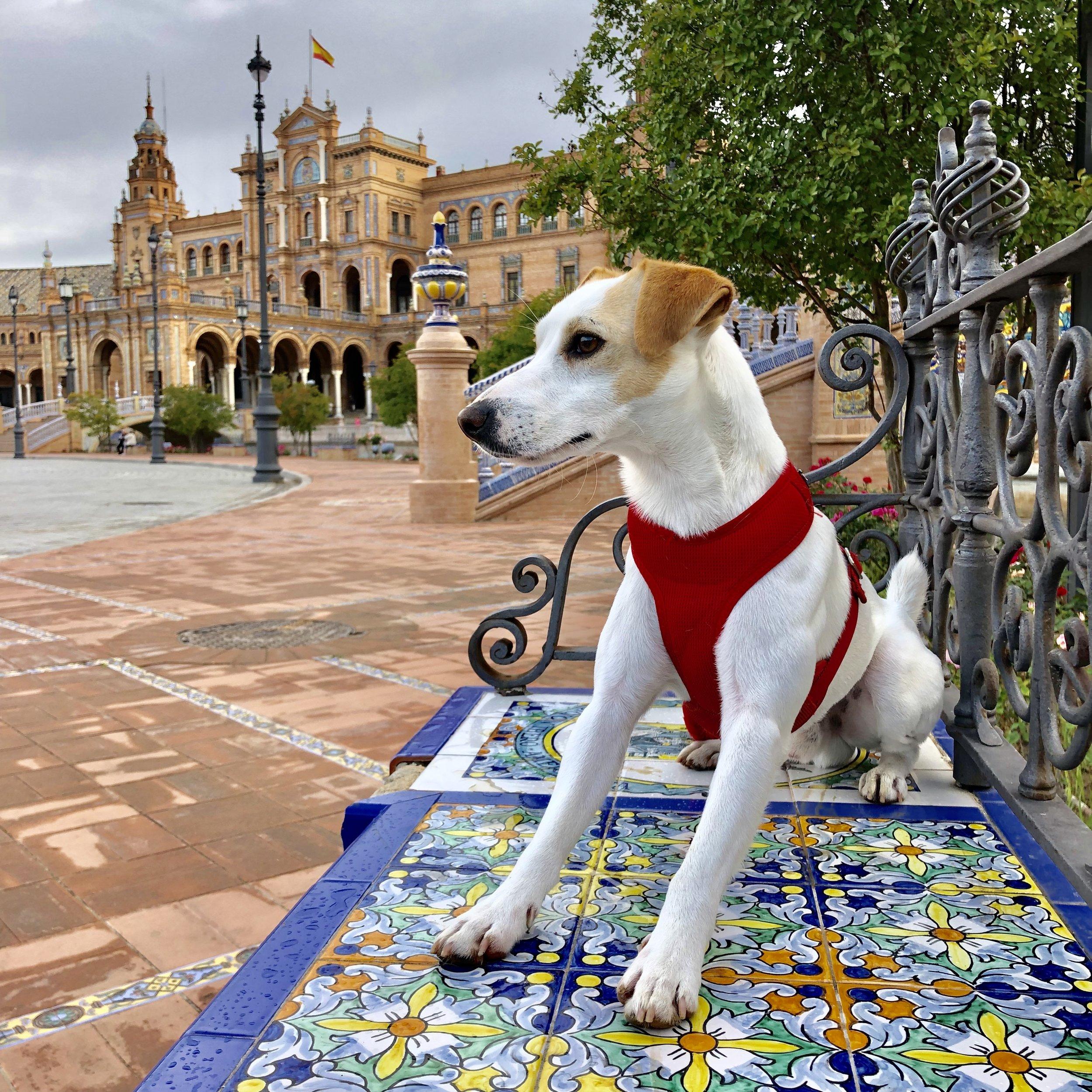 La Plaza de España de Sevilla es perfecta para visitar con perro.
