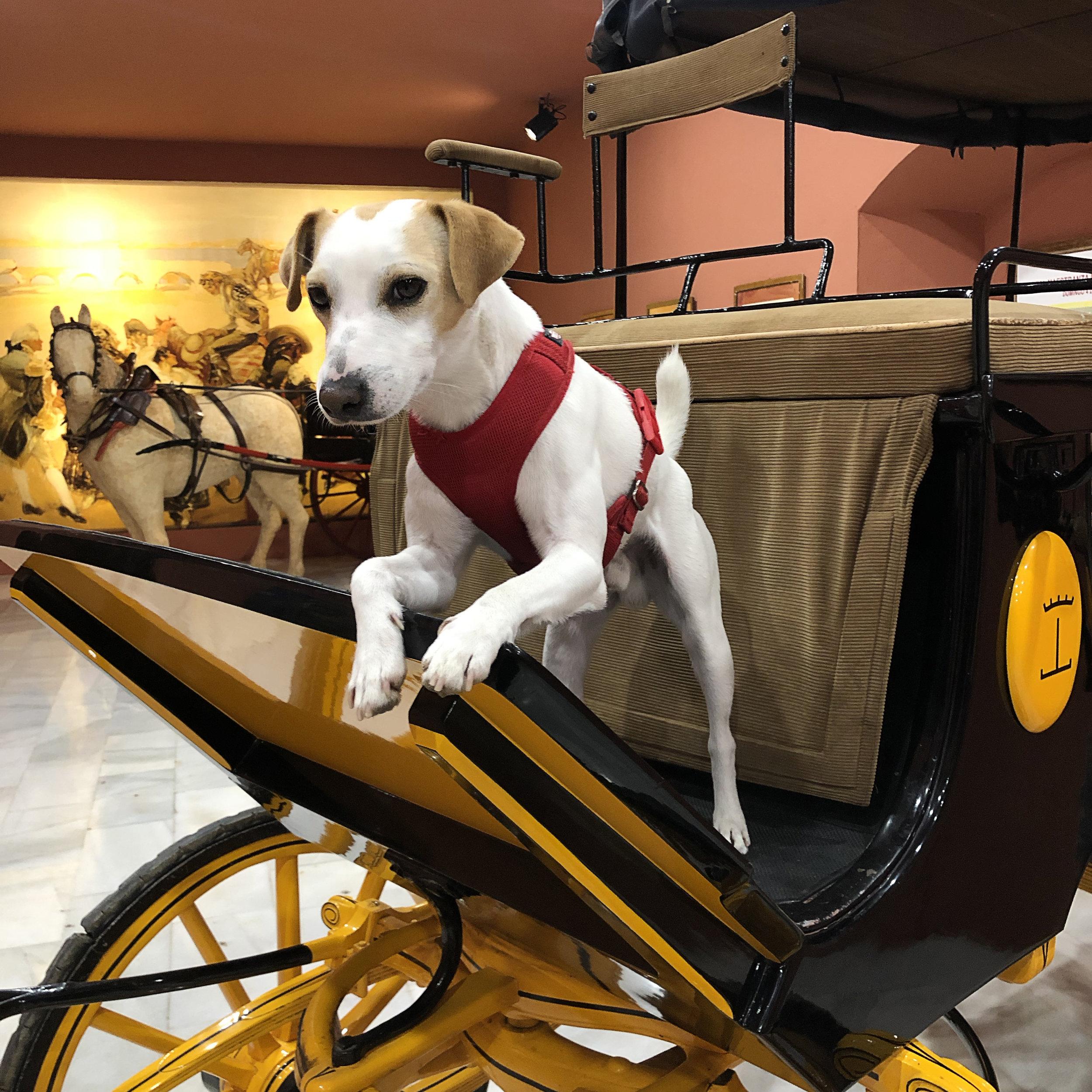Sevilla ya tiene un museo dog friendly.