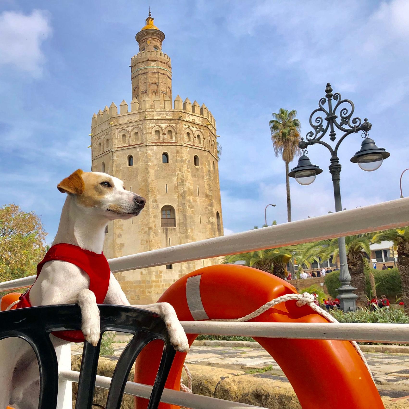 Barcos con perro en Sevilla.