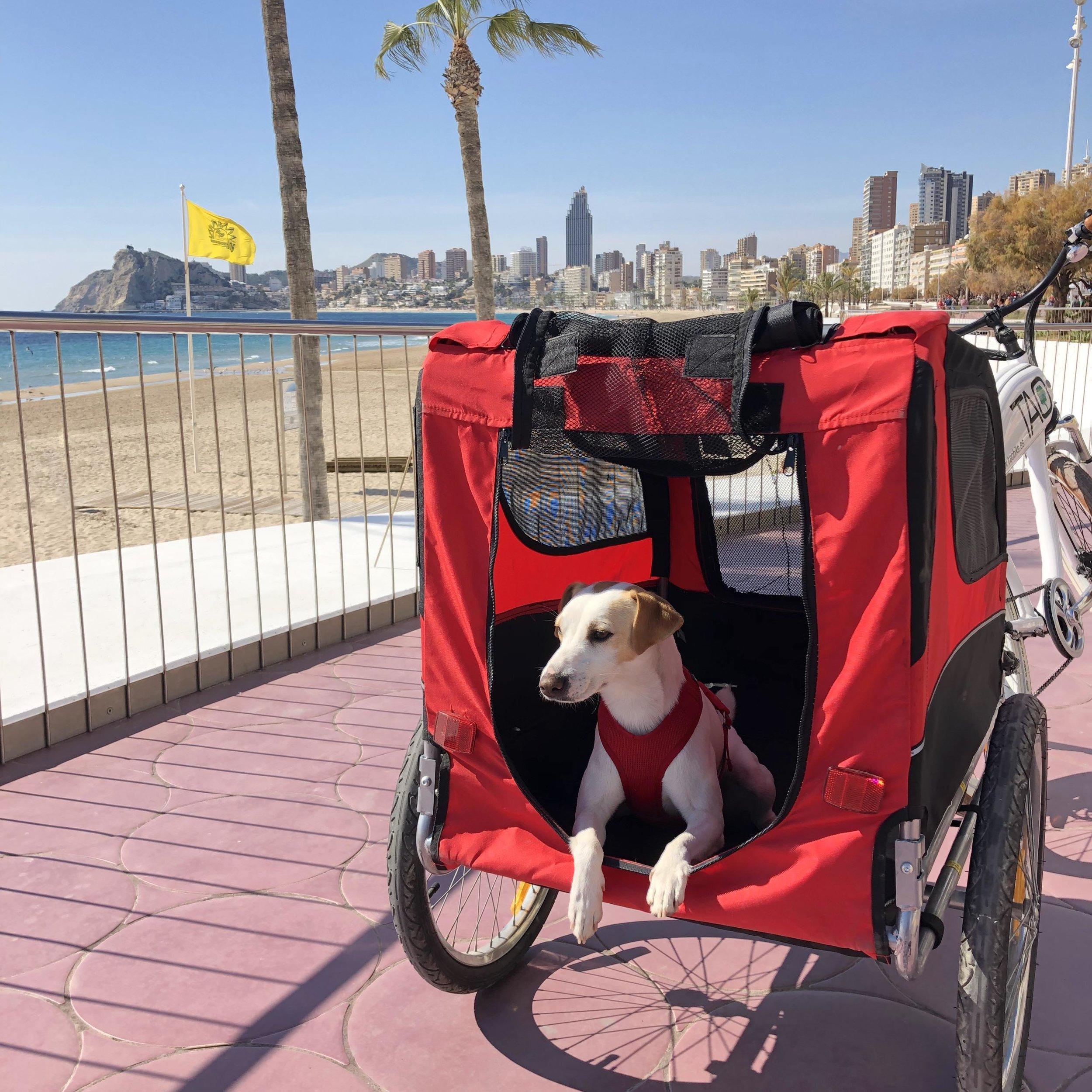 De paseo dogfriendly en bici por Benidorm.