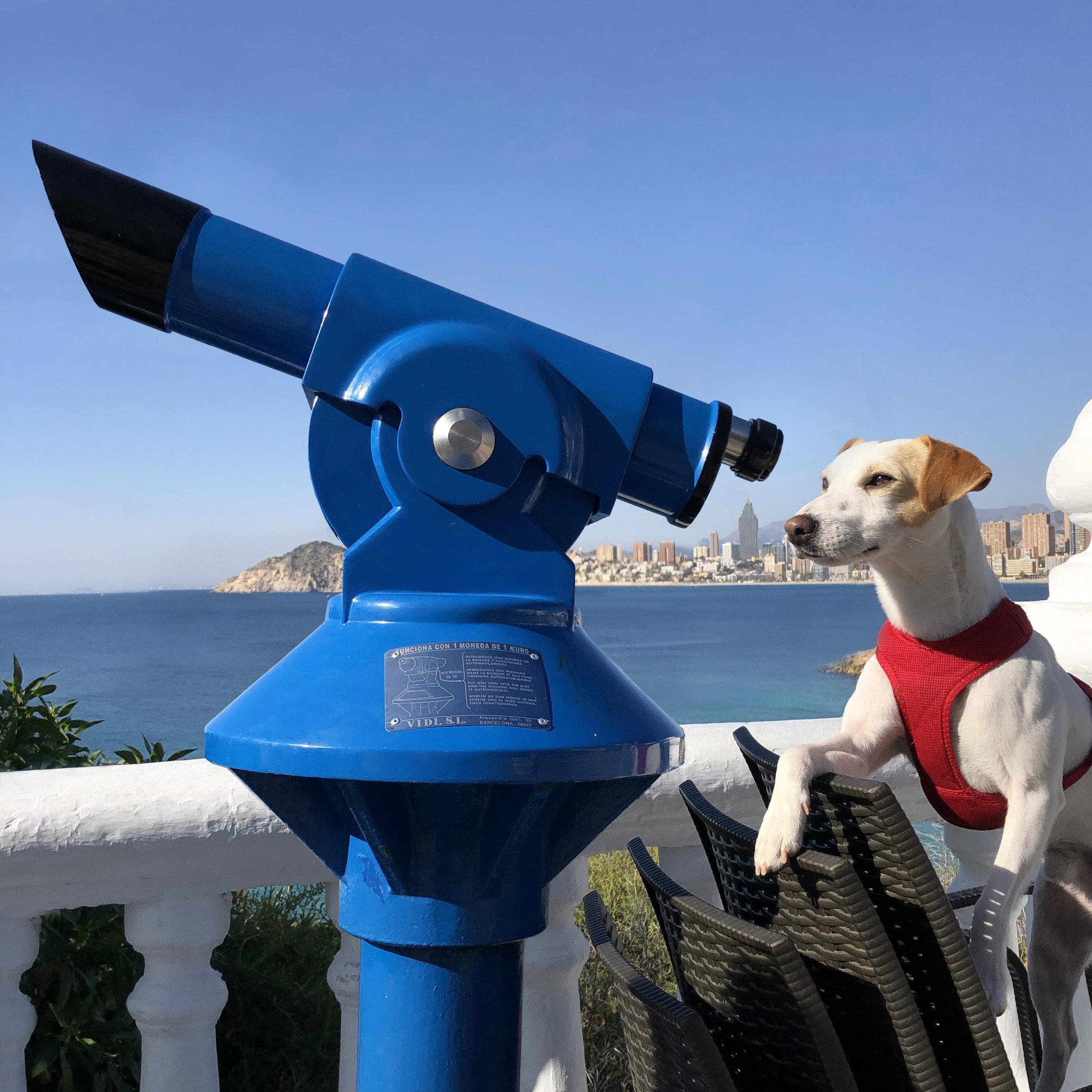 Pipper, el perro viajero, mirando Benidorm por el prismático.