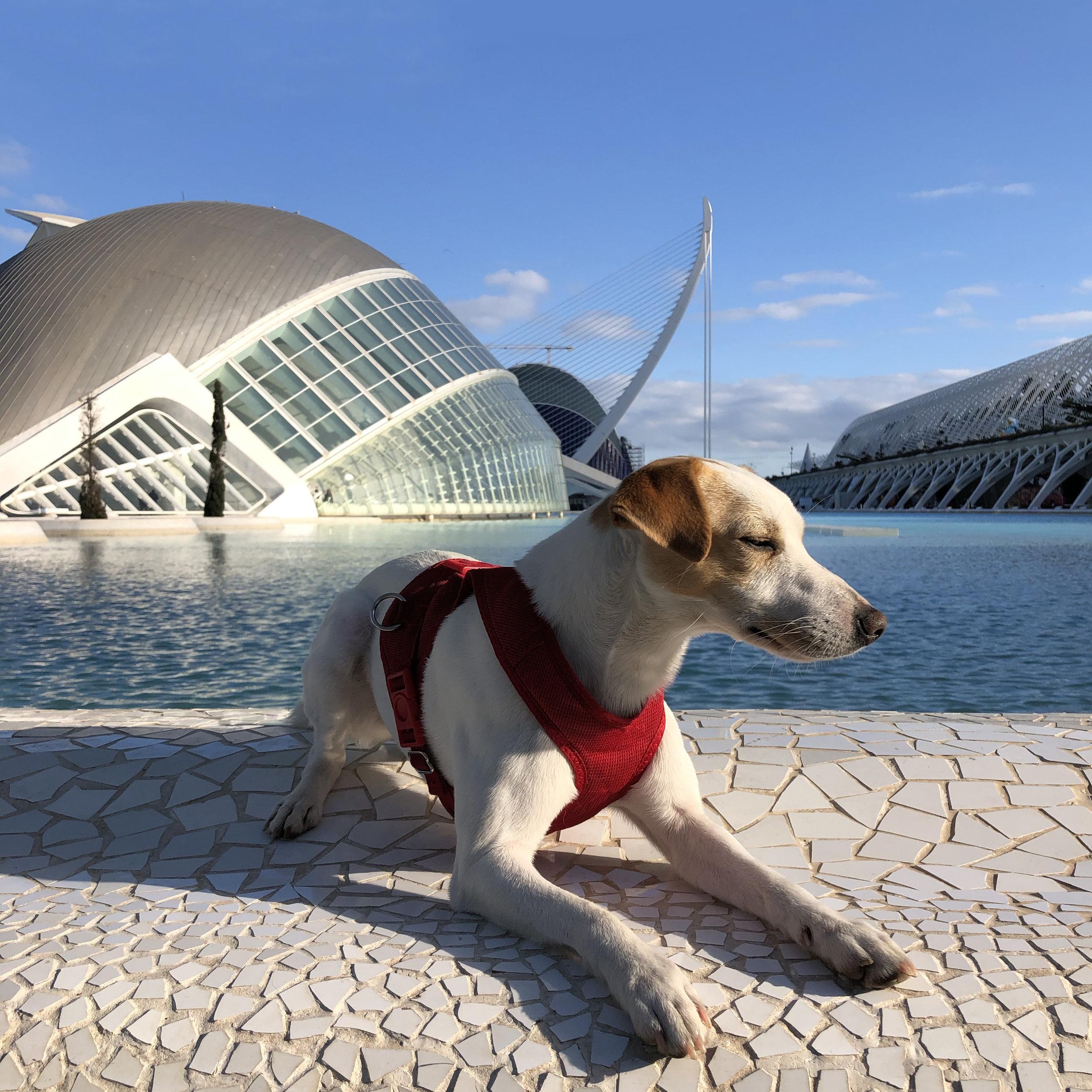 Pipper en la Ciudad de las Artes y las Ciencias de Valencia.
