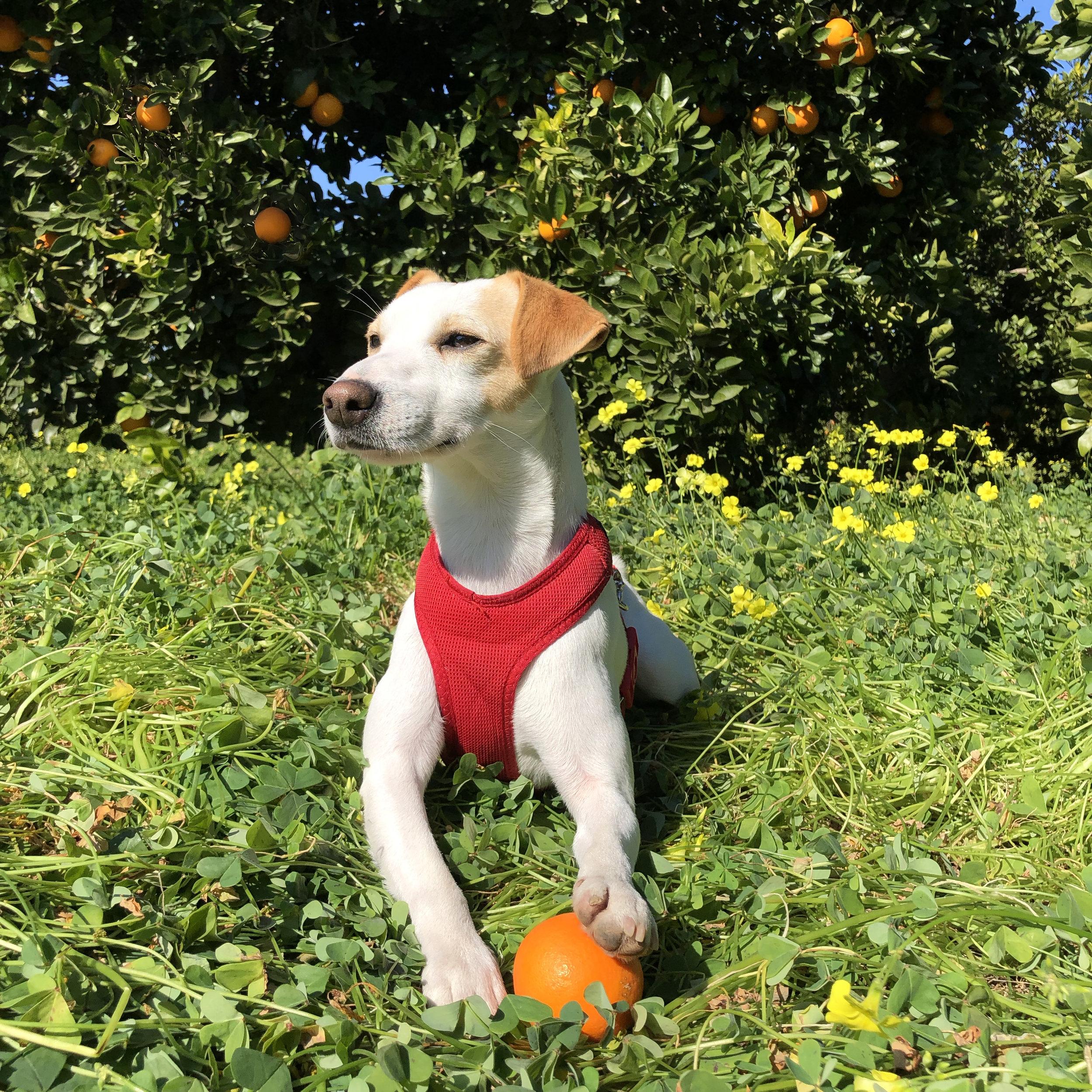 ¿Qué es un viaje sin pelota para un perro?