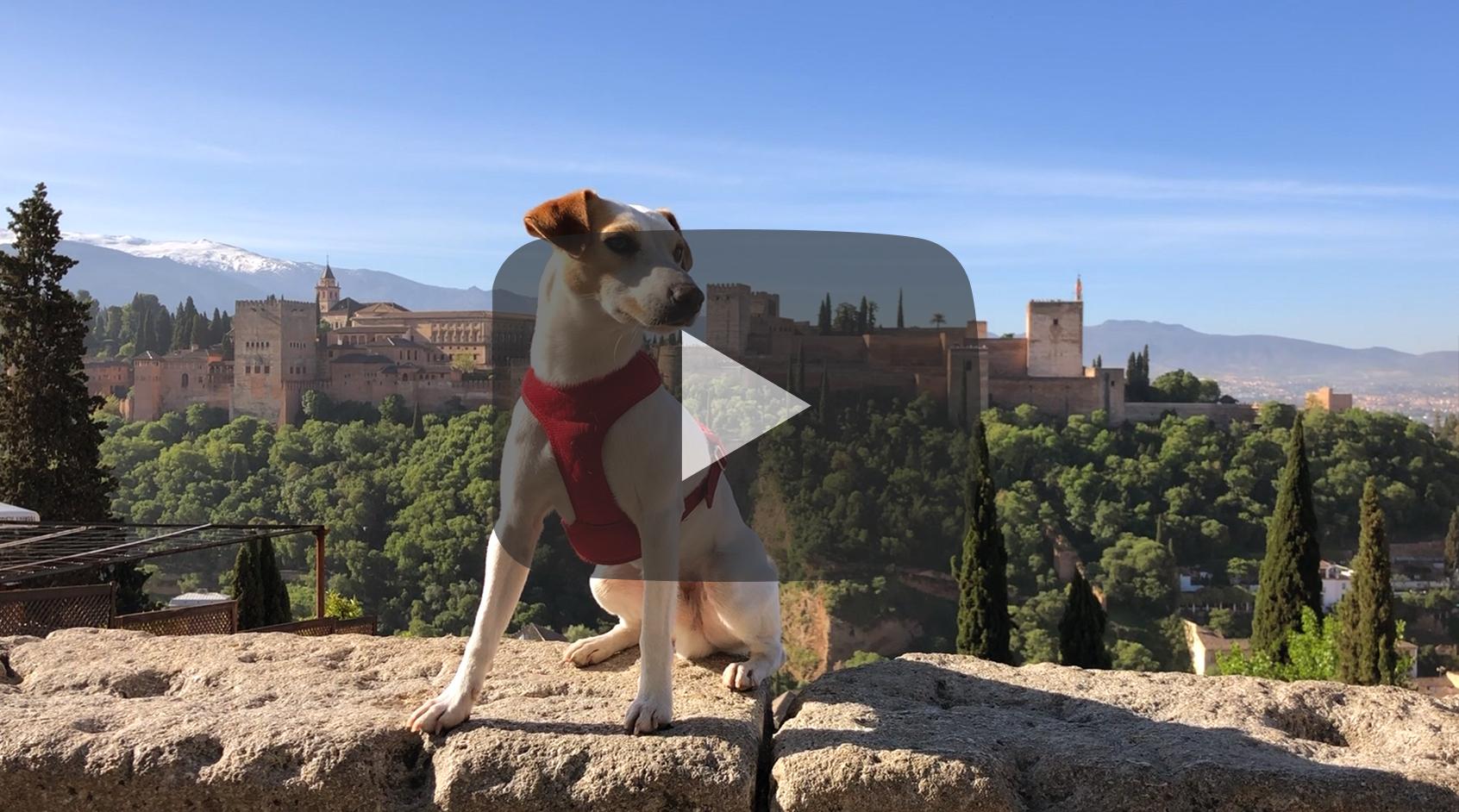 Pipper en Granada.