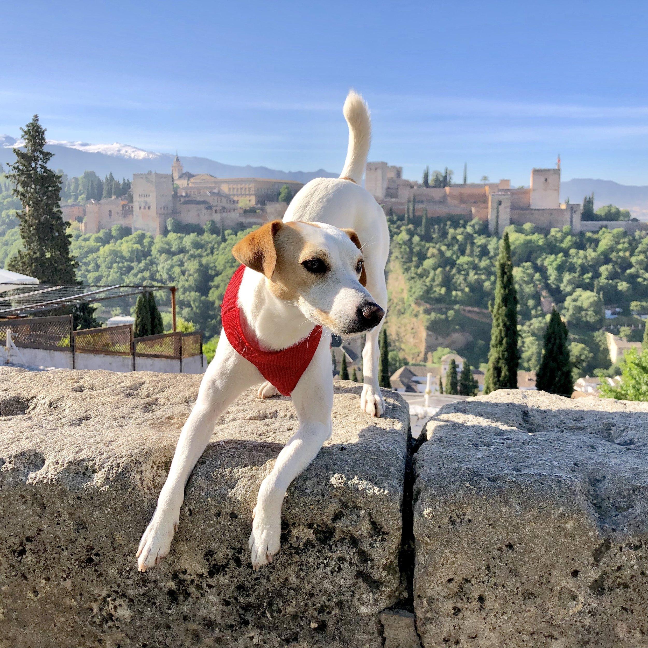 El perro viajero en el Mirador de San Nicolás.
