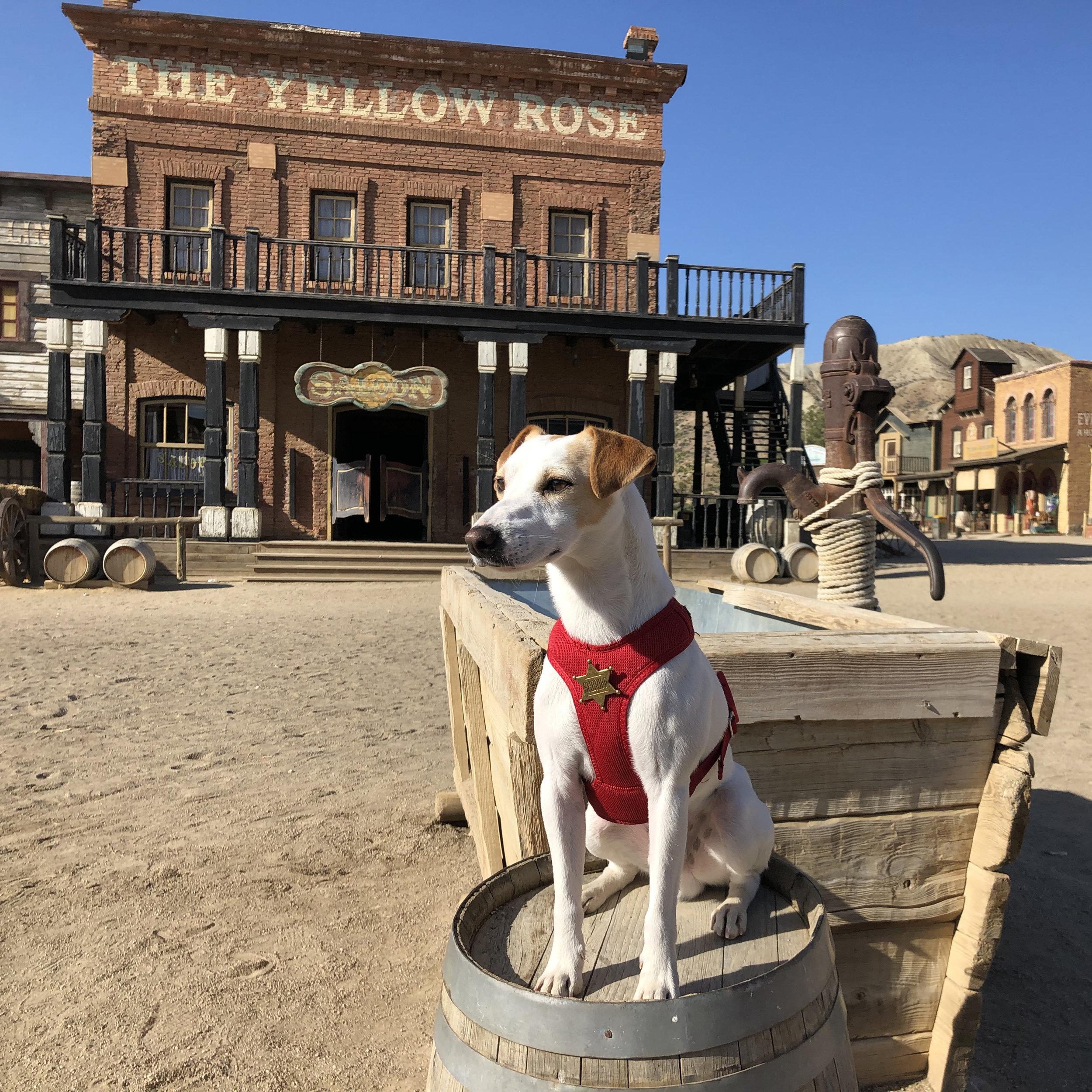 Pipper , el perro viajero , en el Oeste de Almería.