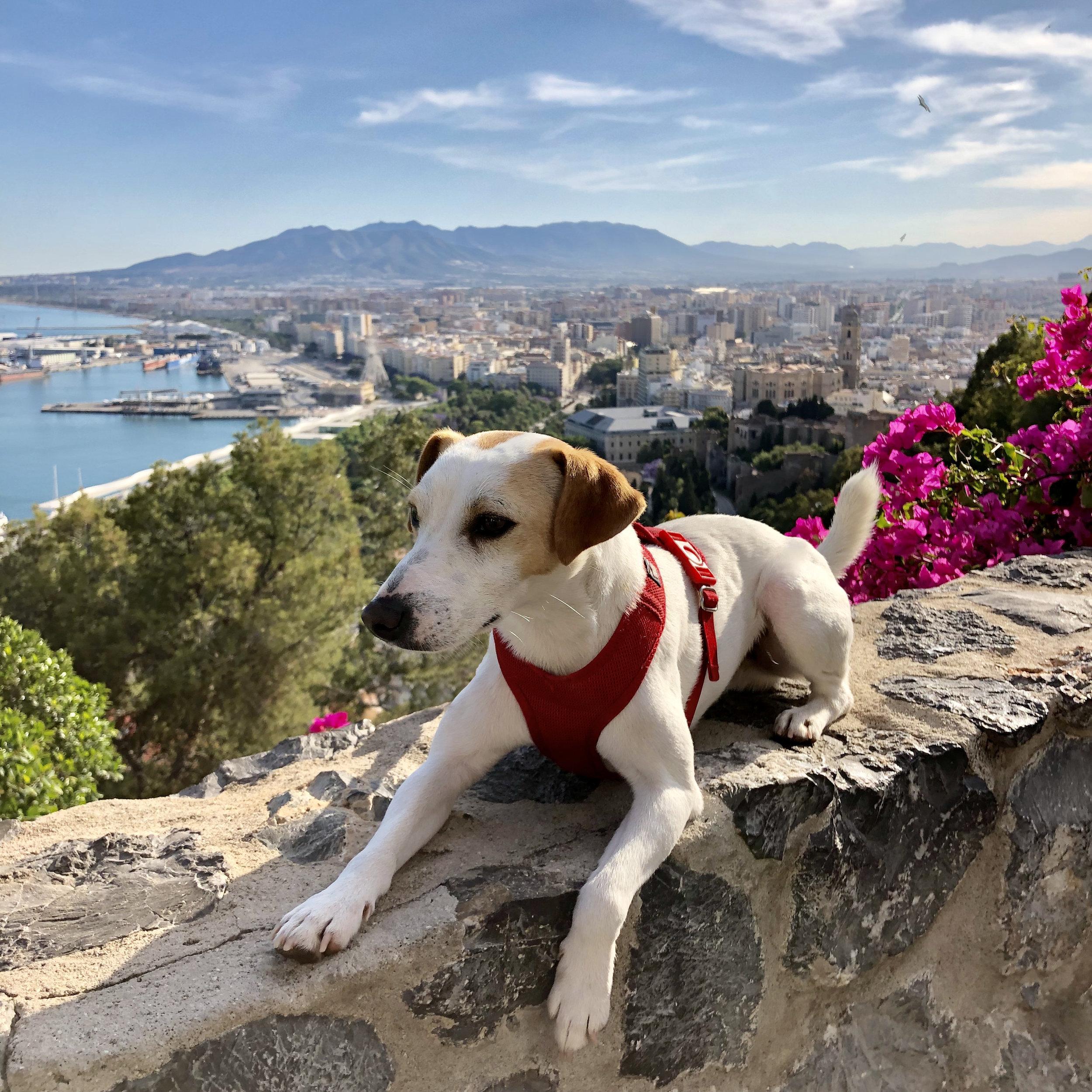 Vistas de Málaga desde la colina de Gibralfaro.