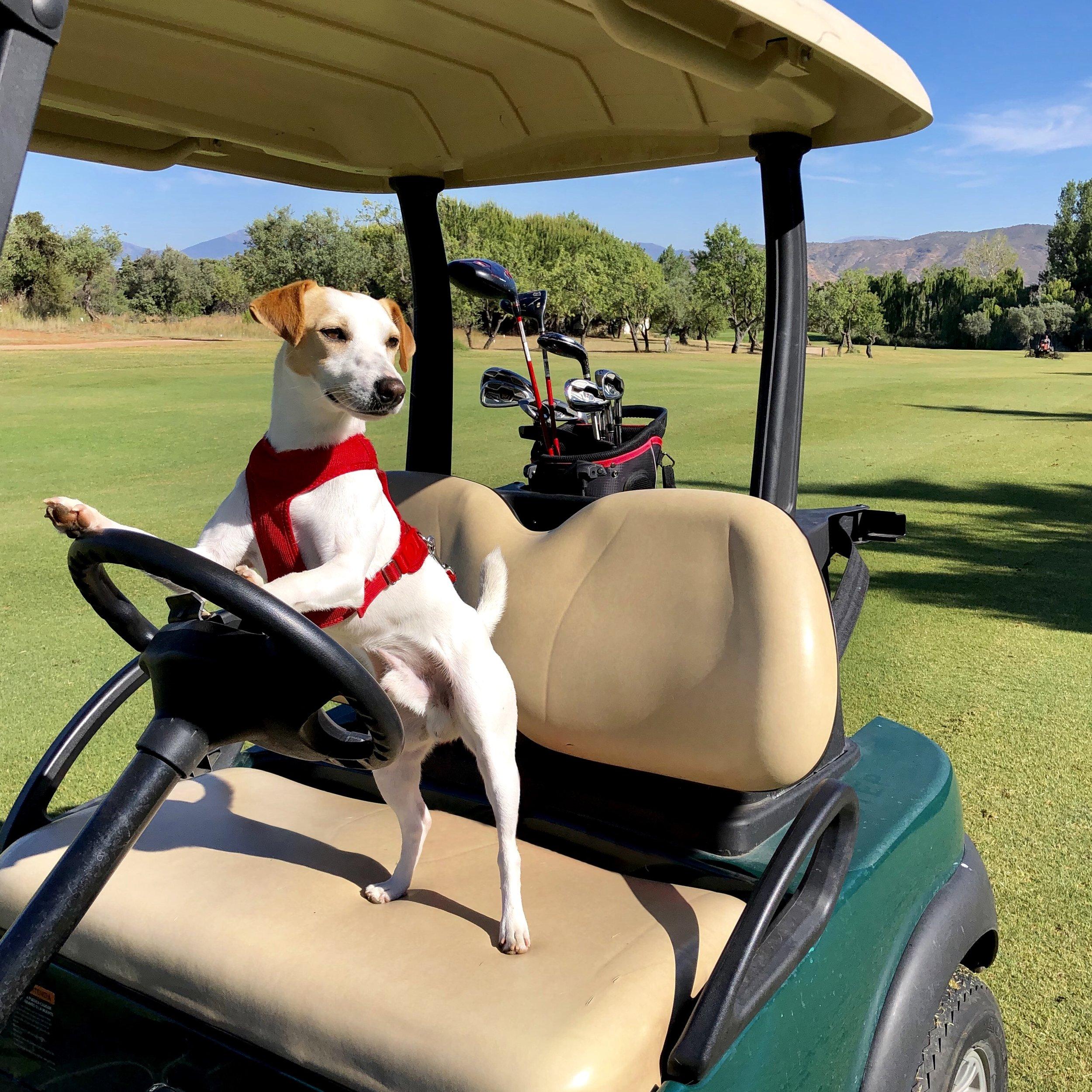 Lauro Golf es un estupendo campo de golf que admite perros.