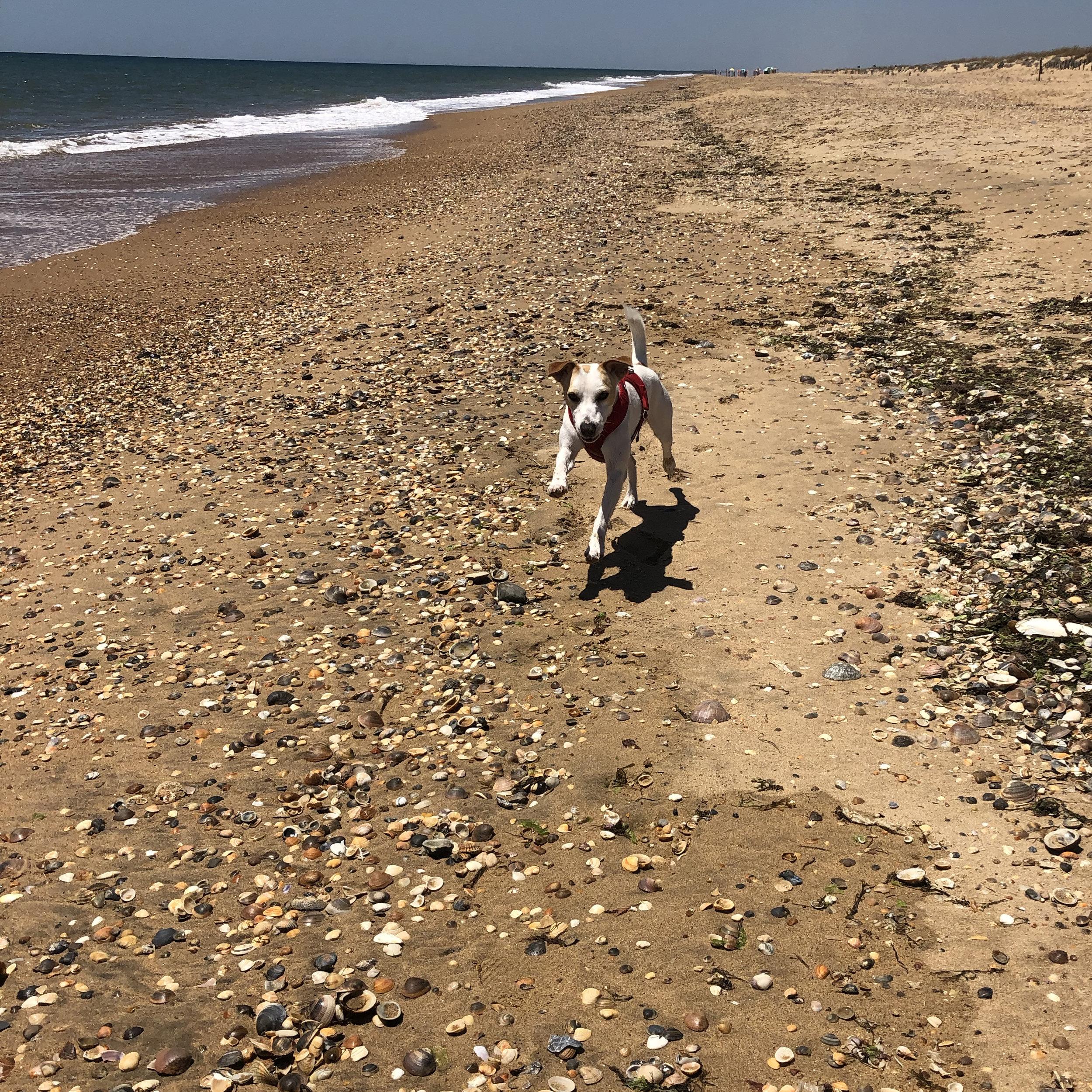 En la playa canina de Huelva.