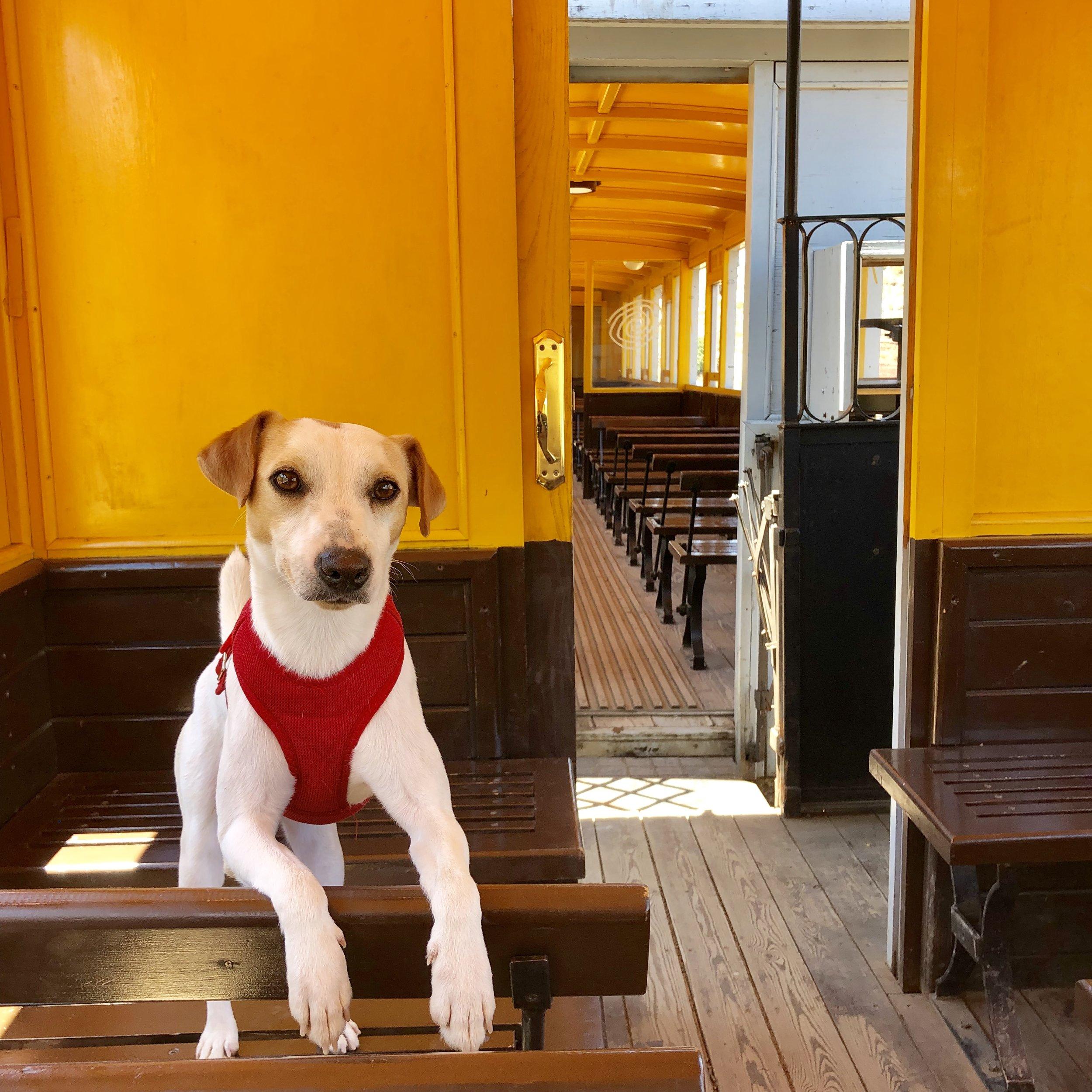 En el tren dogfriendly de las Minas de Riotinto.