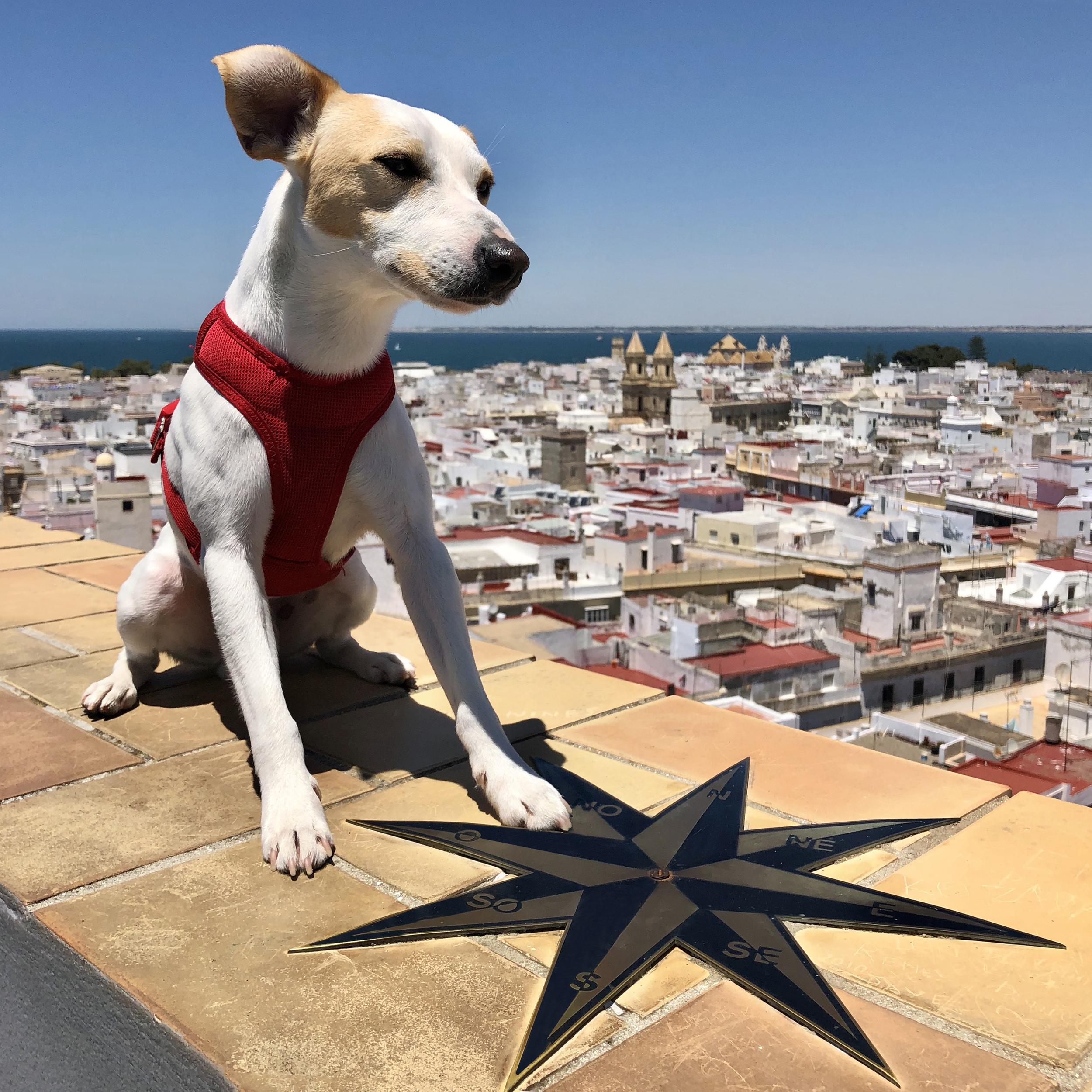 En la azotea de la Torre Tavira dog friendly.