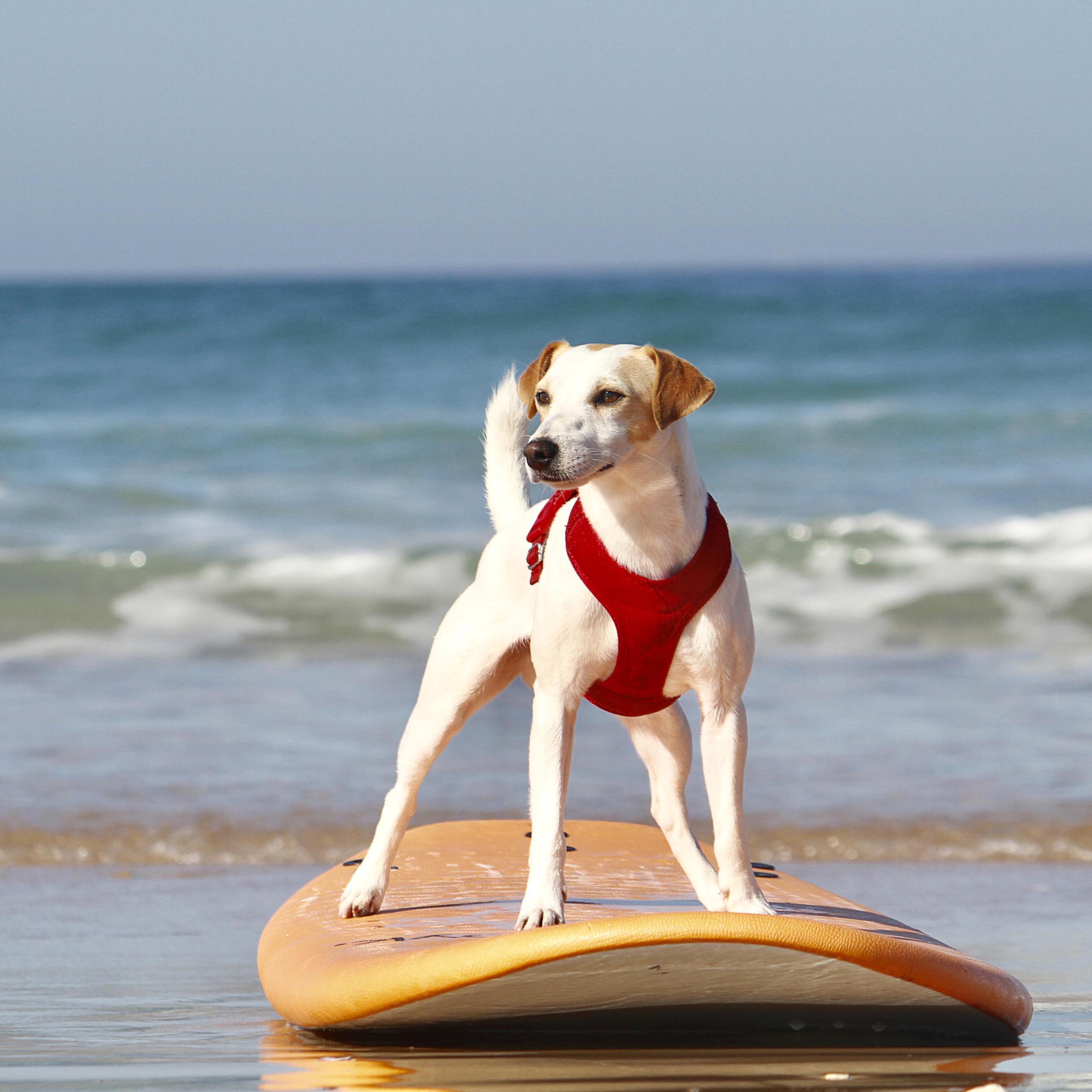 Surf con tu perro en El Palmar.