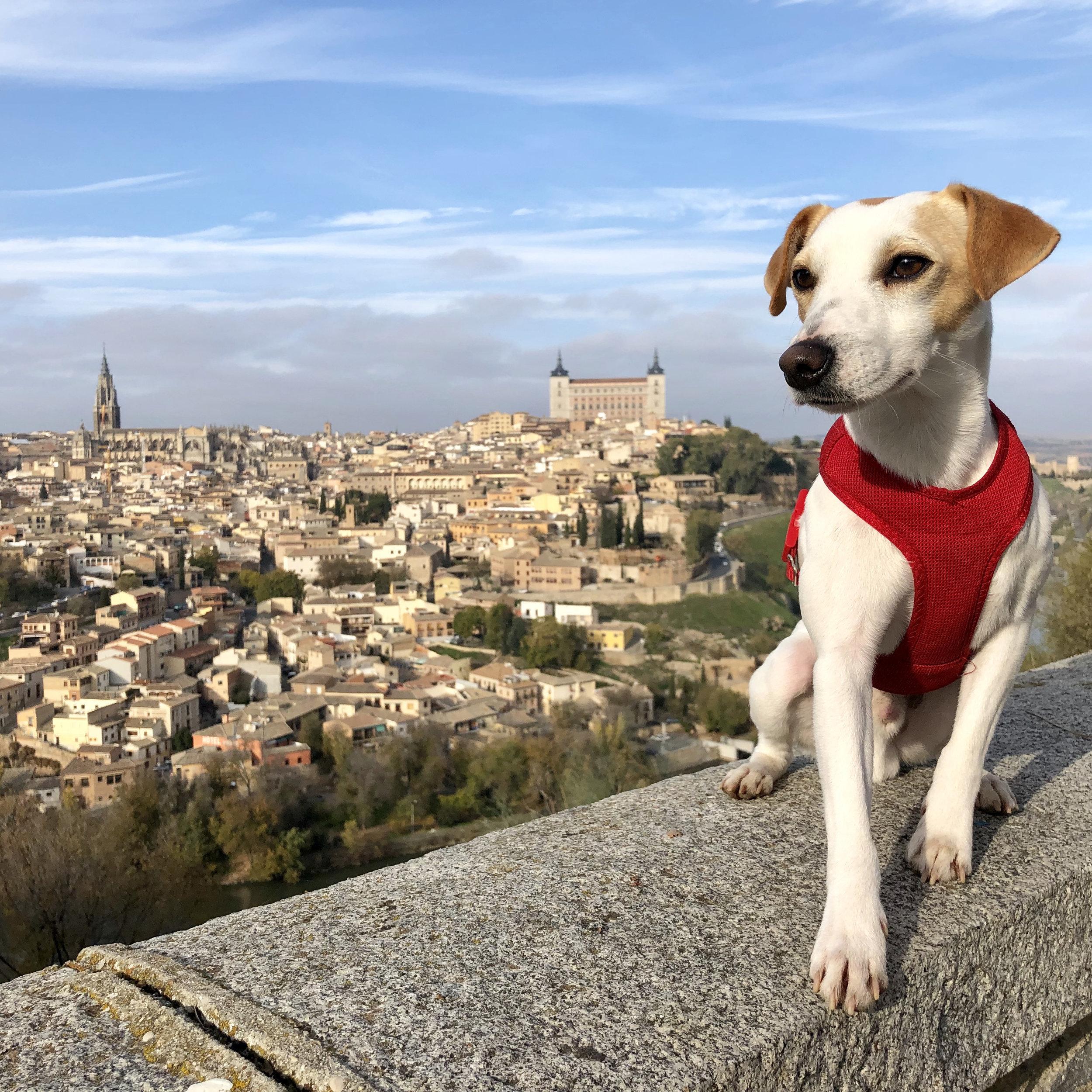 Pipper disfrutando de las famosas vistas de Toledo.