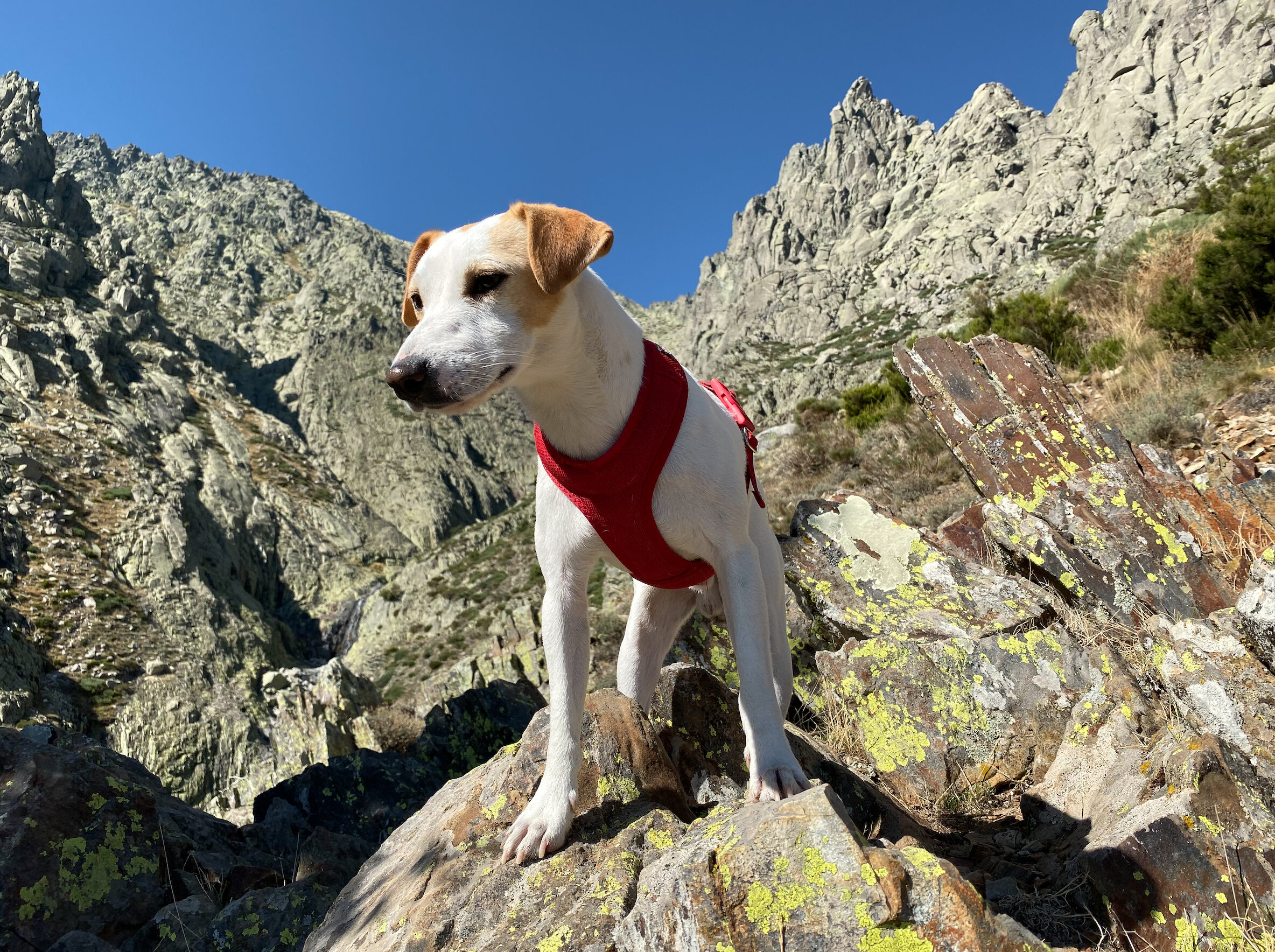 El perro turista Pipper en su ascenso hacia Los Galayos en septiembre de 2019.