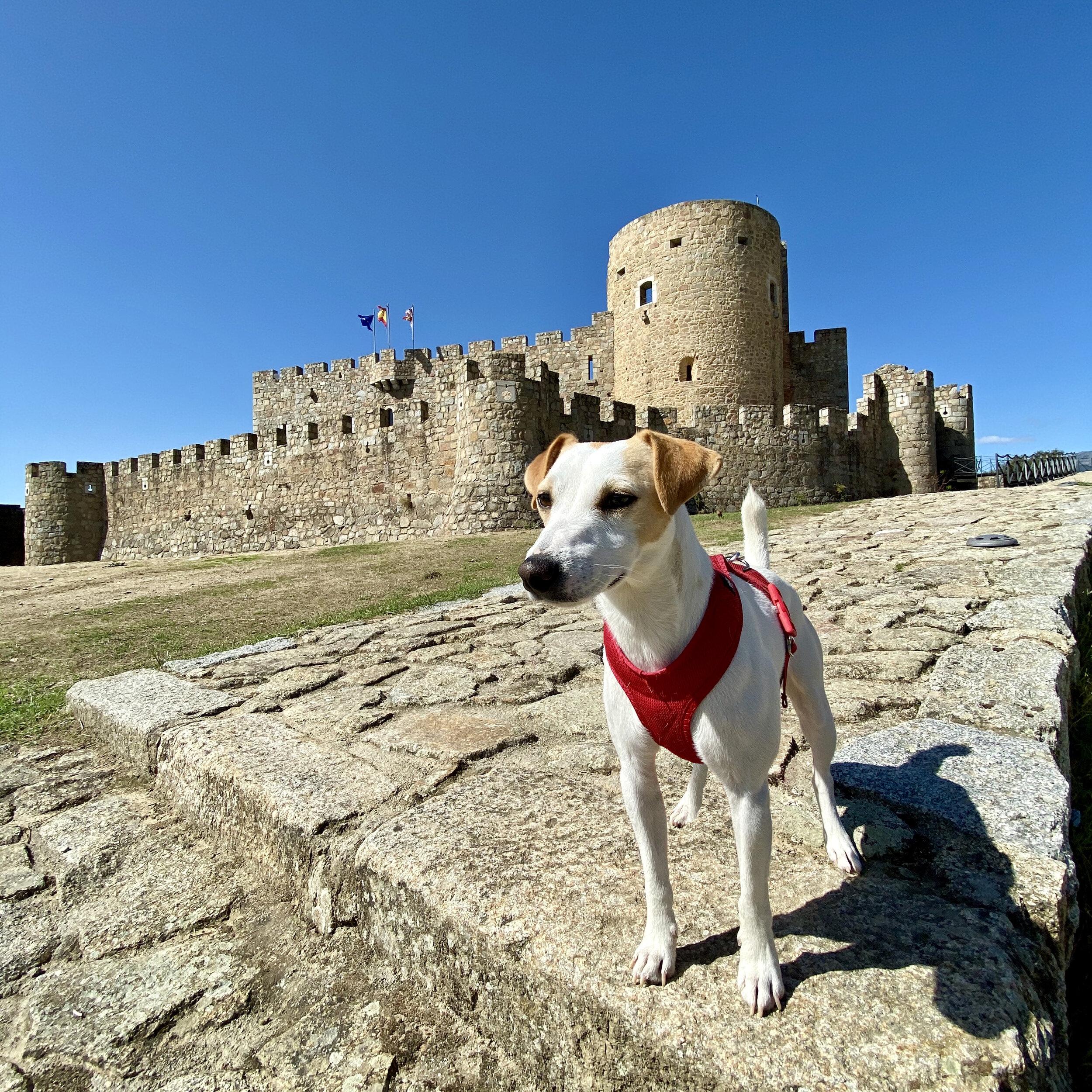 Pipper en el castillo de La Adrada.